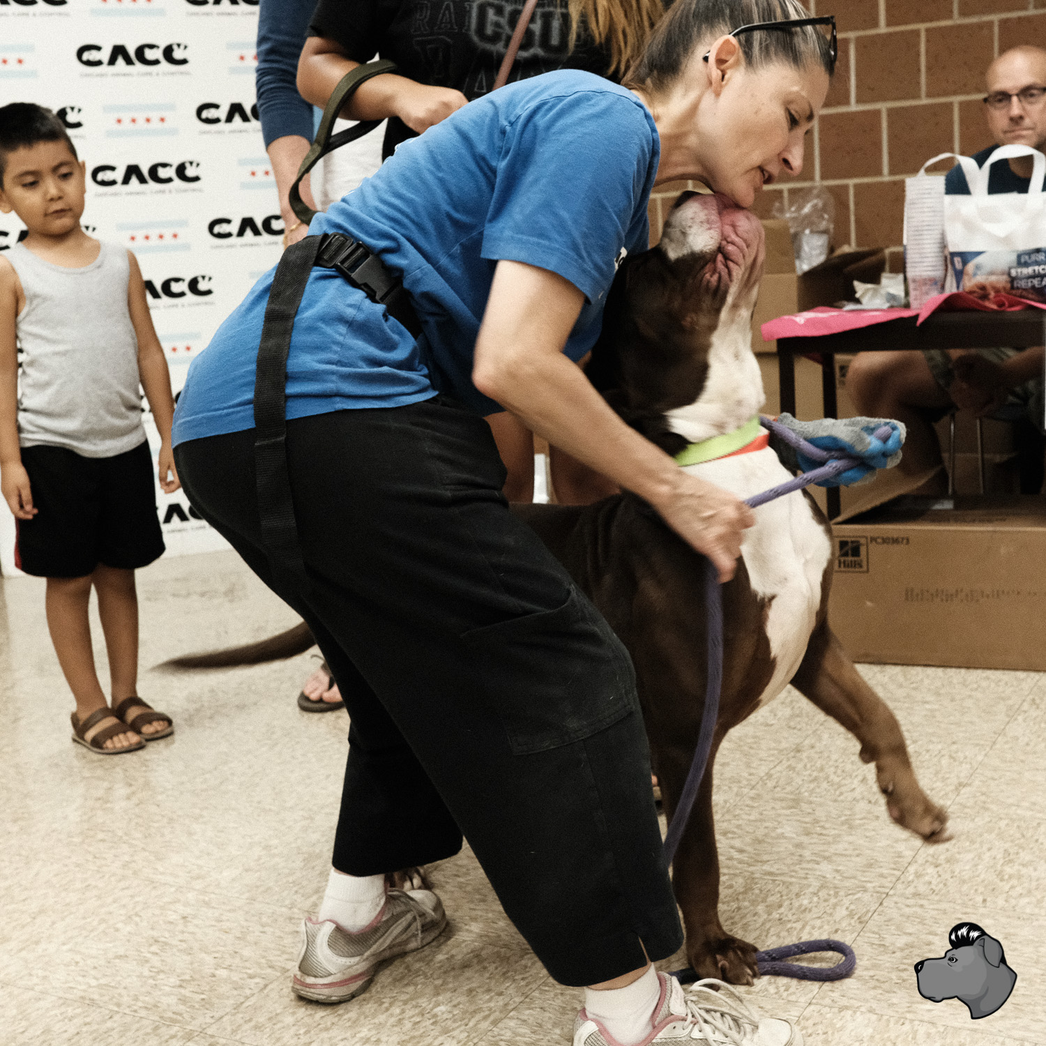 clear-the-shelters-chicago-00027.jpg