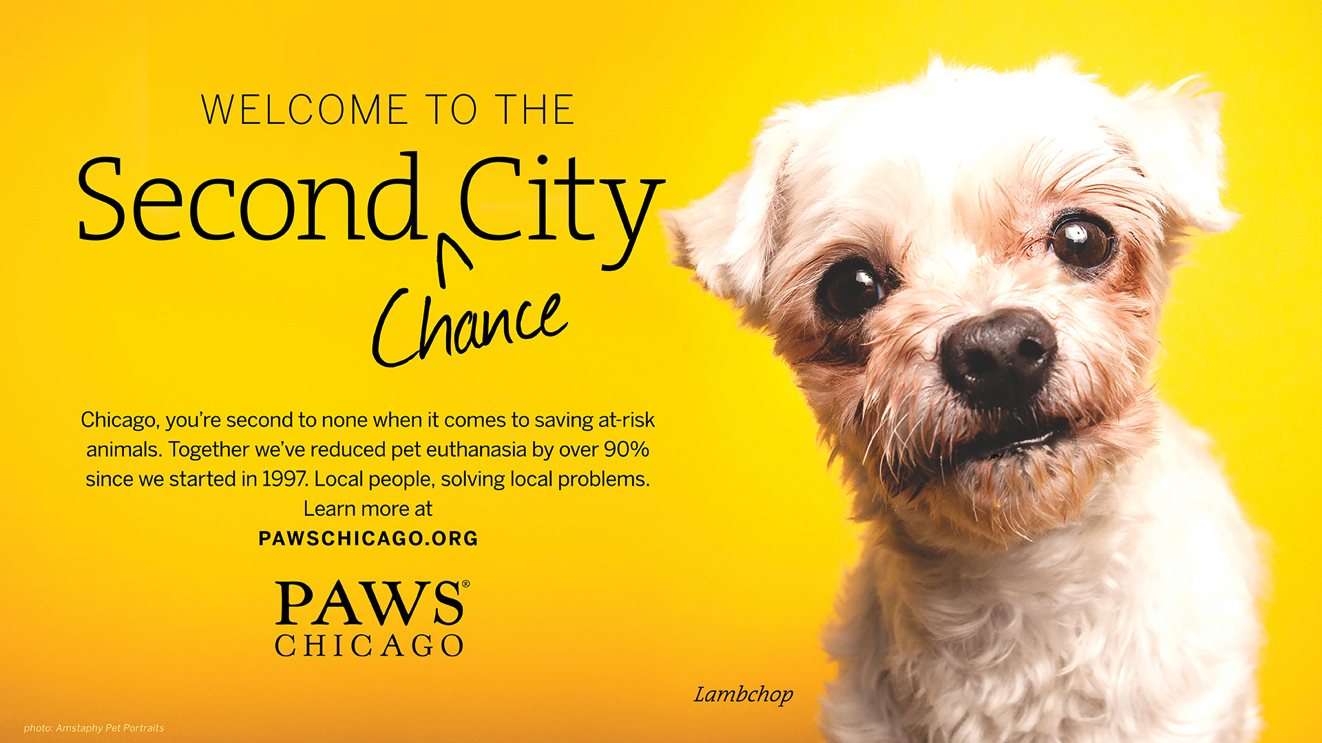PAWS Chicago Ad Campaign by AMSTAPHY, Senior Pet Photography