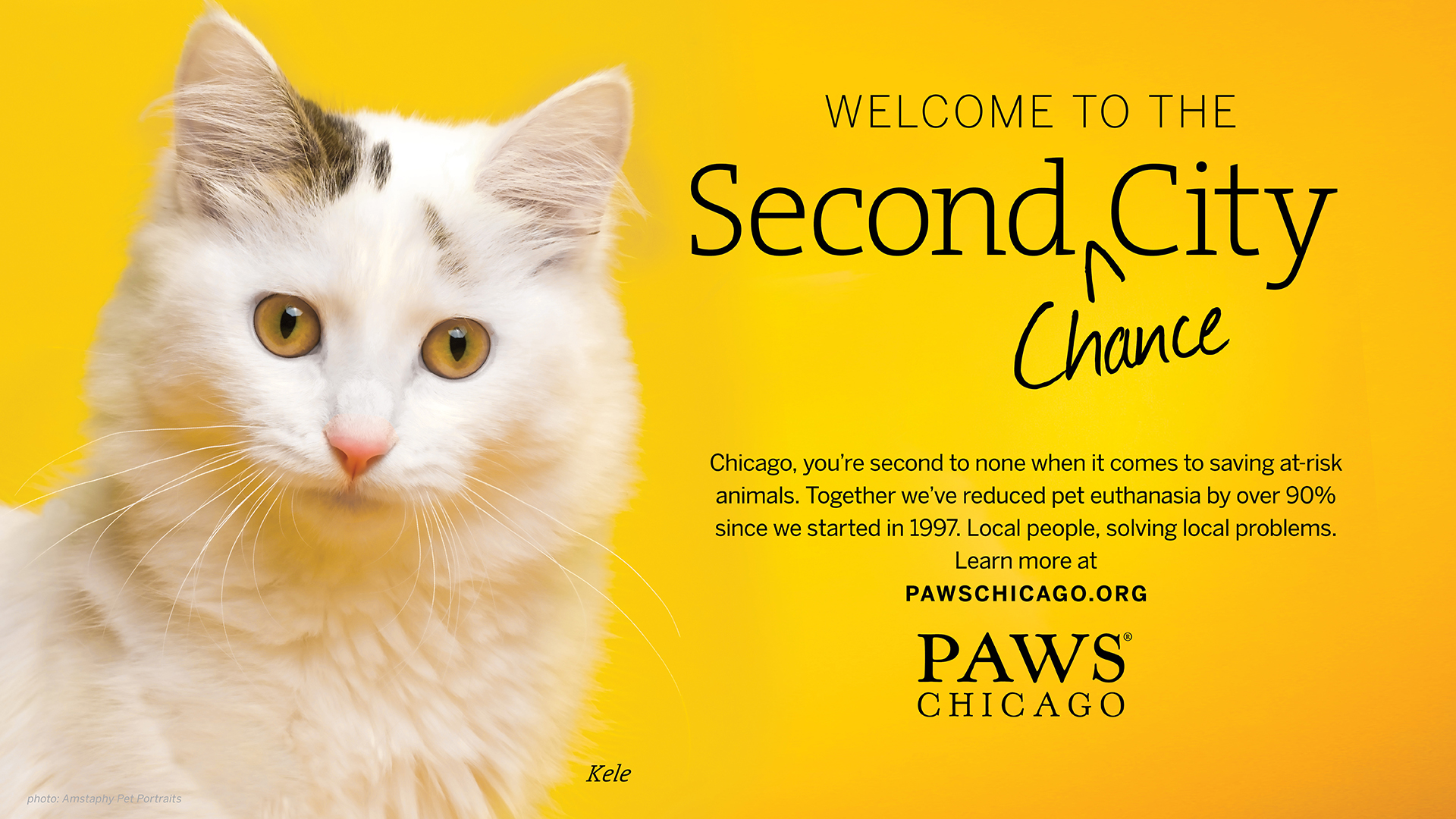 PAWS_Chicago_Cat_1.jpg