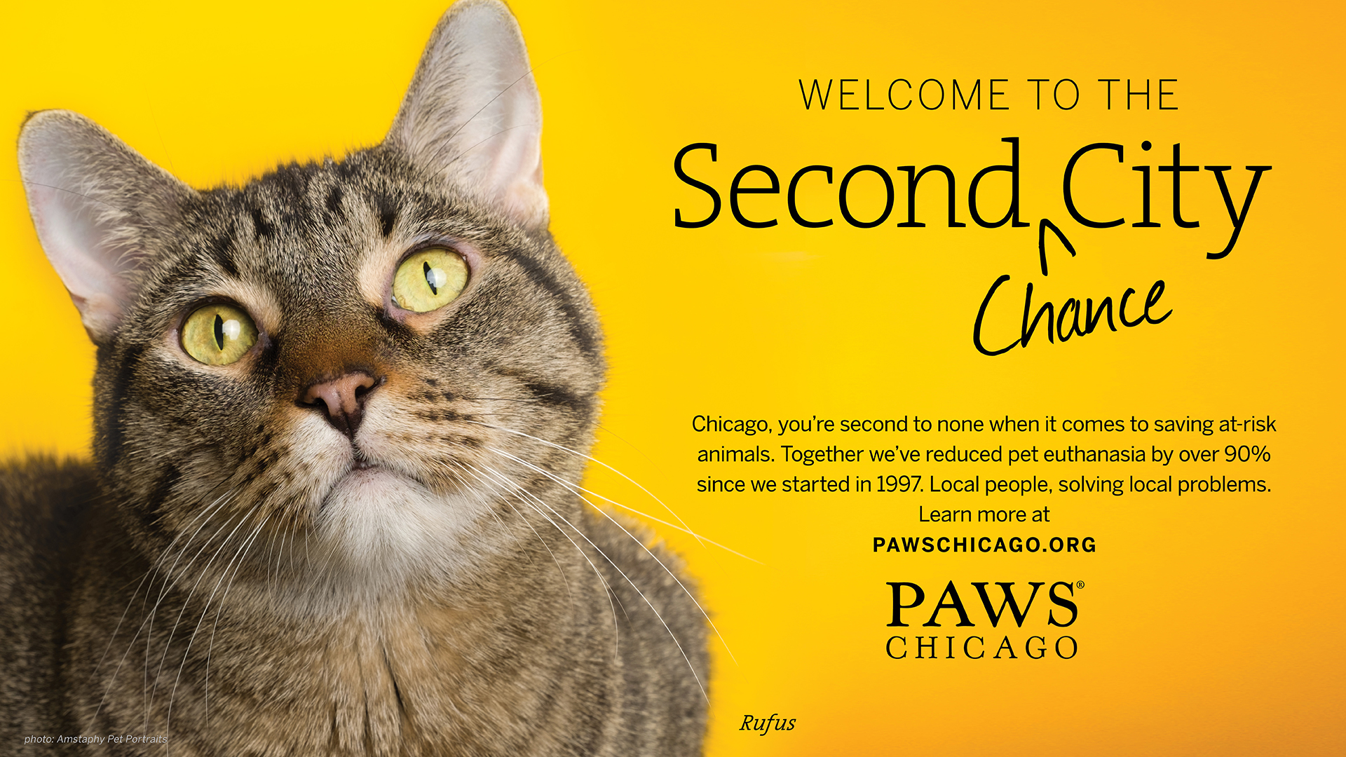 PAWS_Chicago_Cat_2.jpg