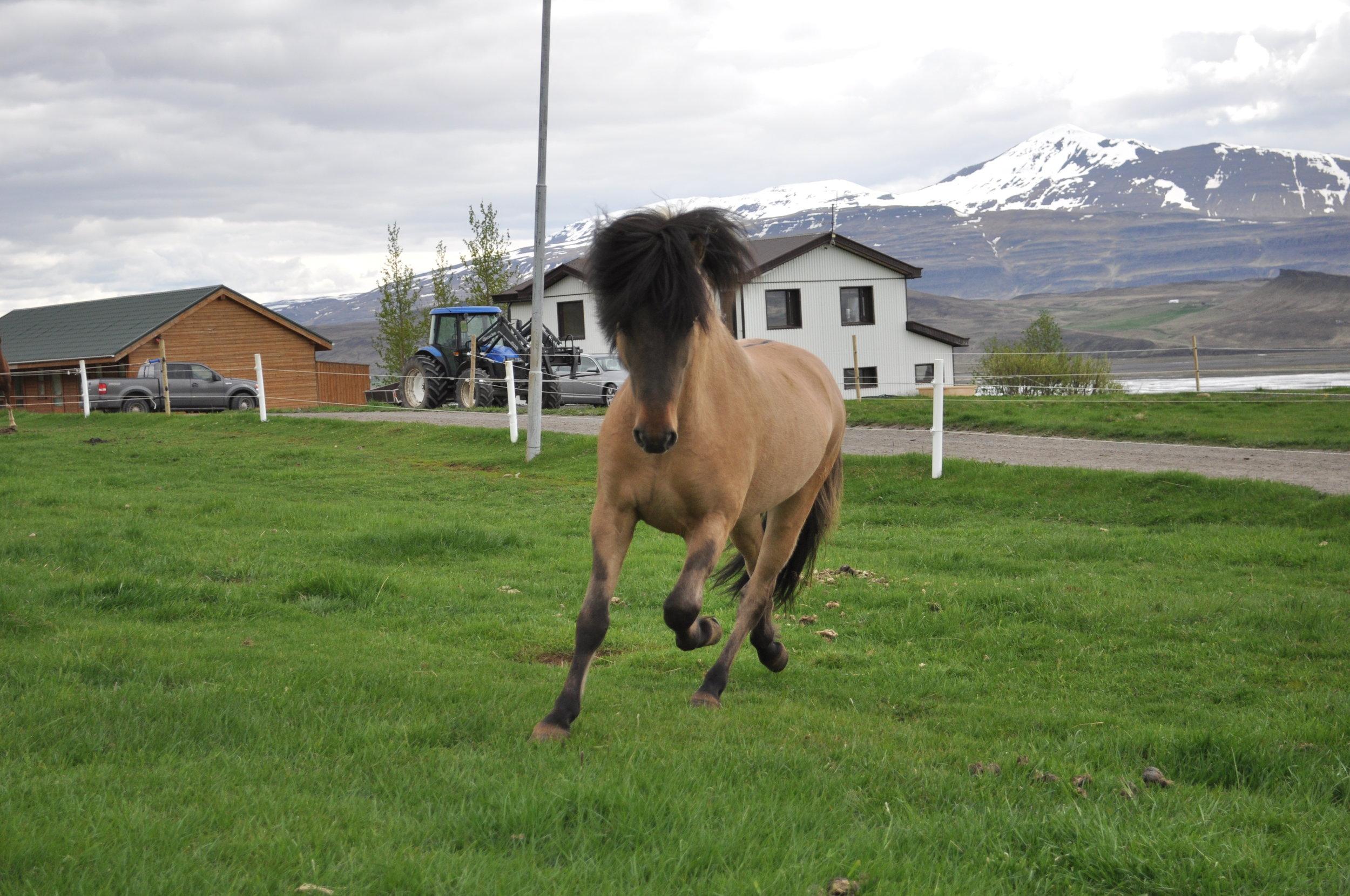 Midsitja horse farm..jpg