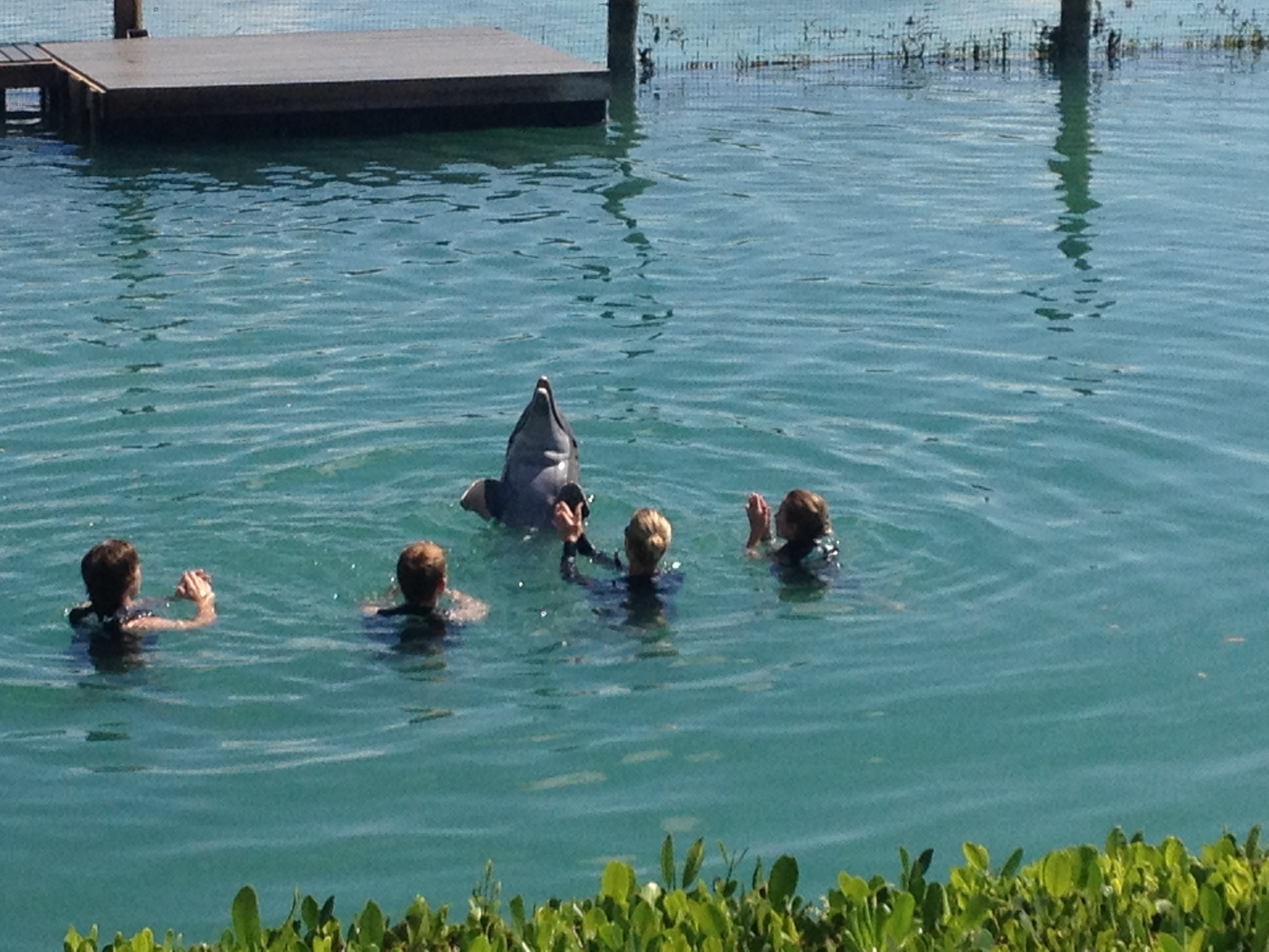Kids in the water with dolphins