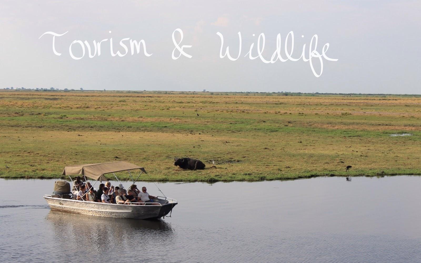 tourists cruise along the Chobe River
