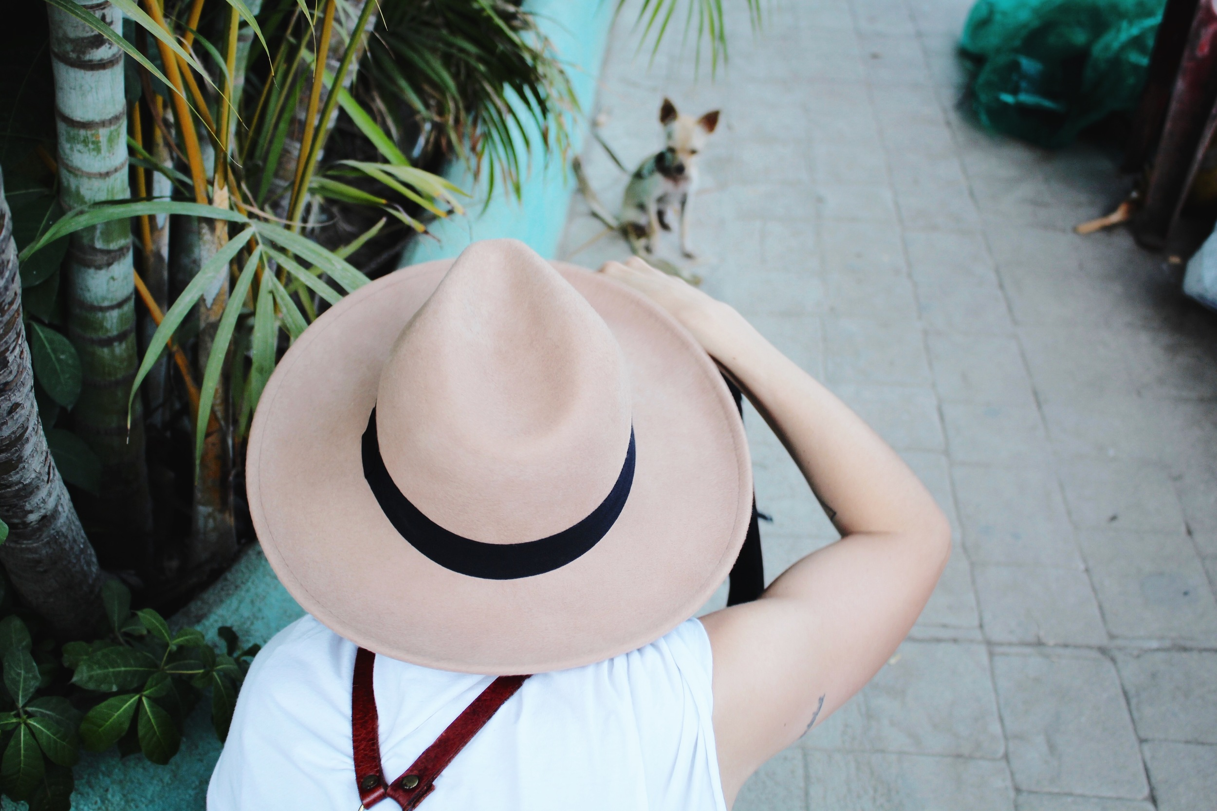 Lily Rose  snaps a photo of a chihuahua in Sayulita, Mexico.