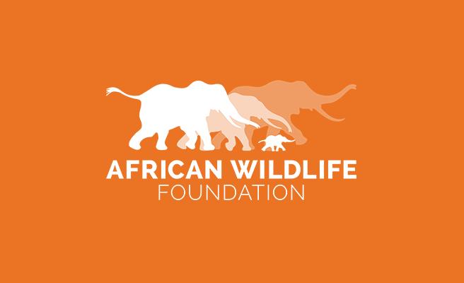 Blog Contributor,  AFrican Wildlife Foundation