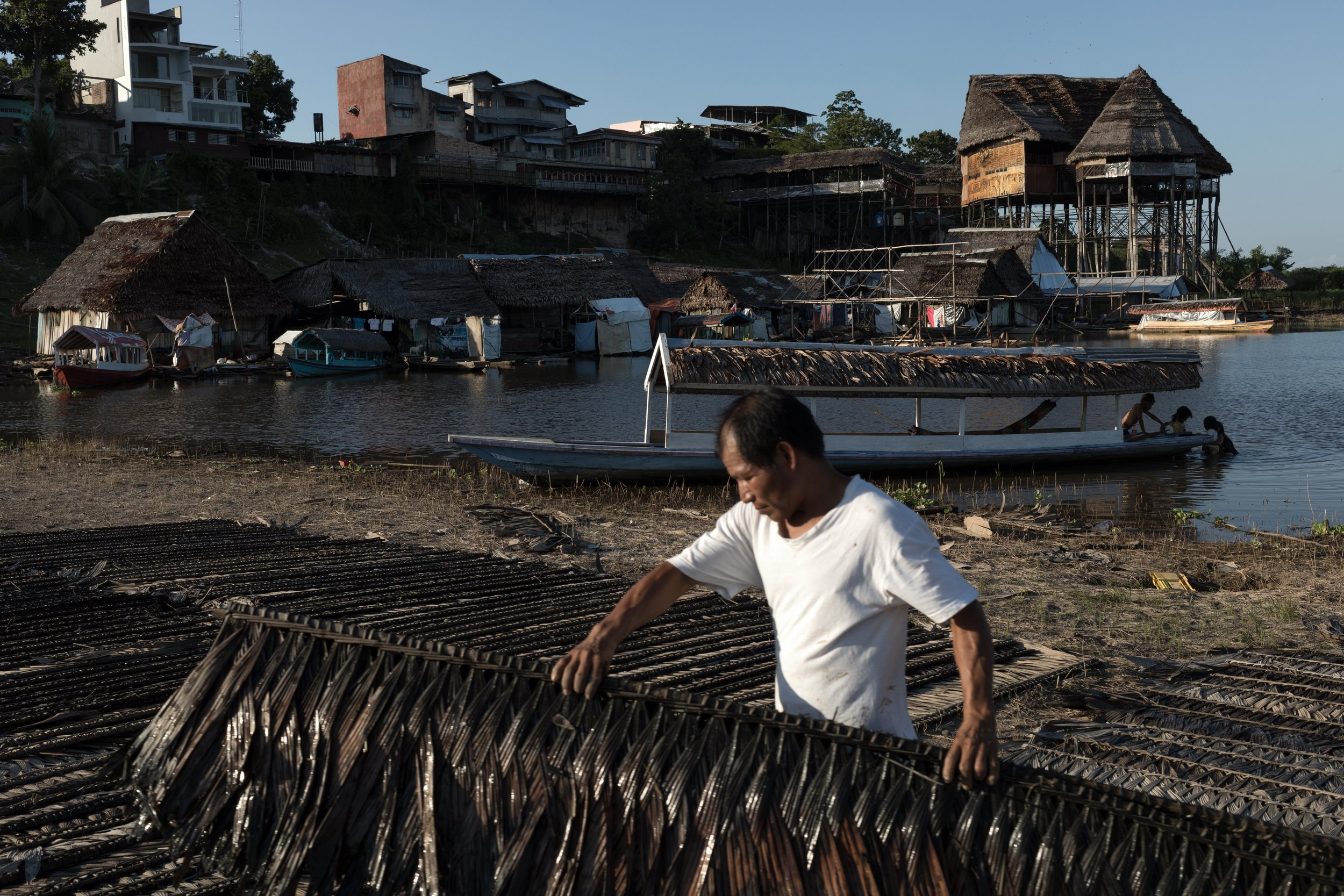 Mr. Alcides lining up palm leaves to use as roof on his house -Iquitos, Peru