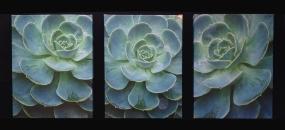 Wendy Vroom - Photography - wendyvroom.com