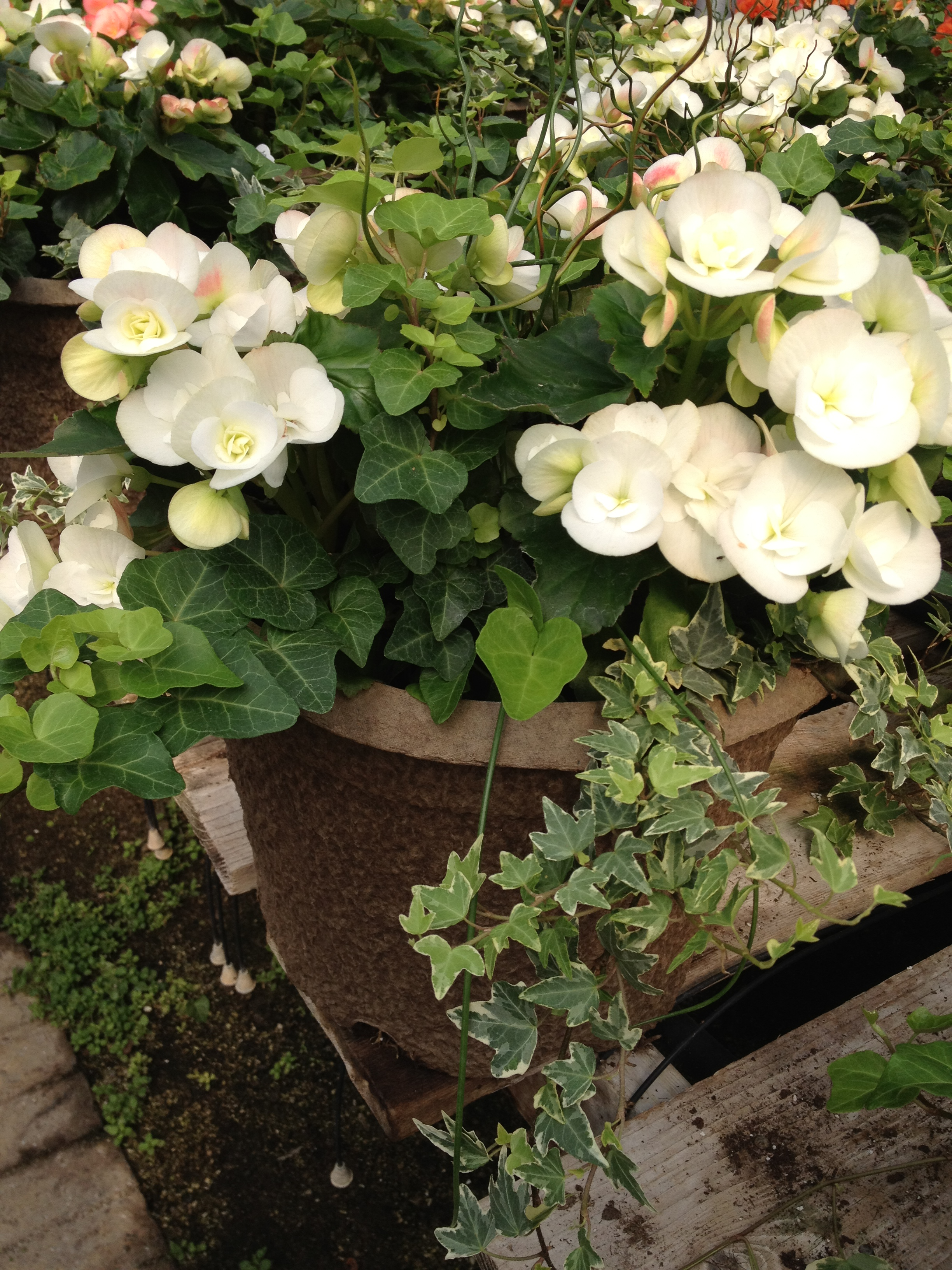 """12"""" Reiger Combo Planter with Twister"""