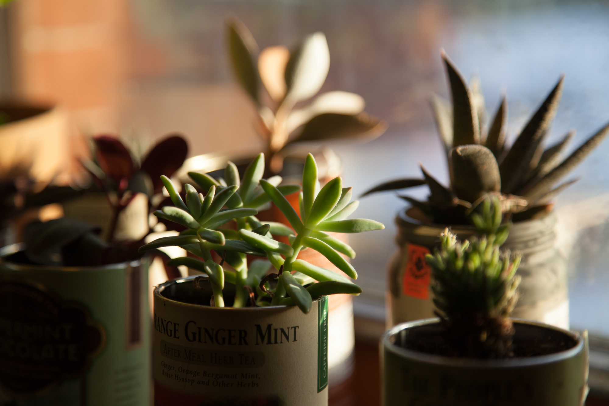 Upcycled tea canister garden with succulents.
