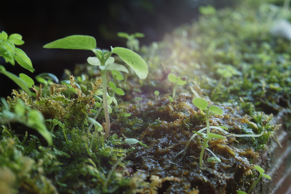 """If you've ever admired or wanted to grow moss in your home, then a perfect """"habitat"""" is in a woodland terrarium."""