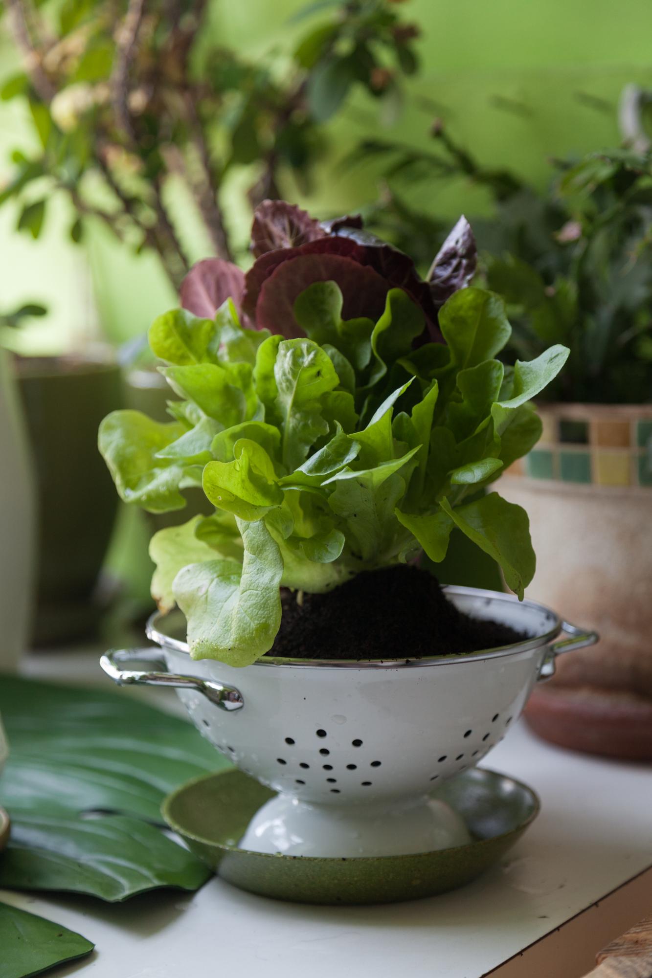 colander-planter-homestead-brooklyn.jpg