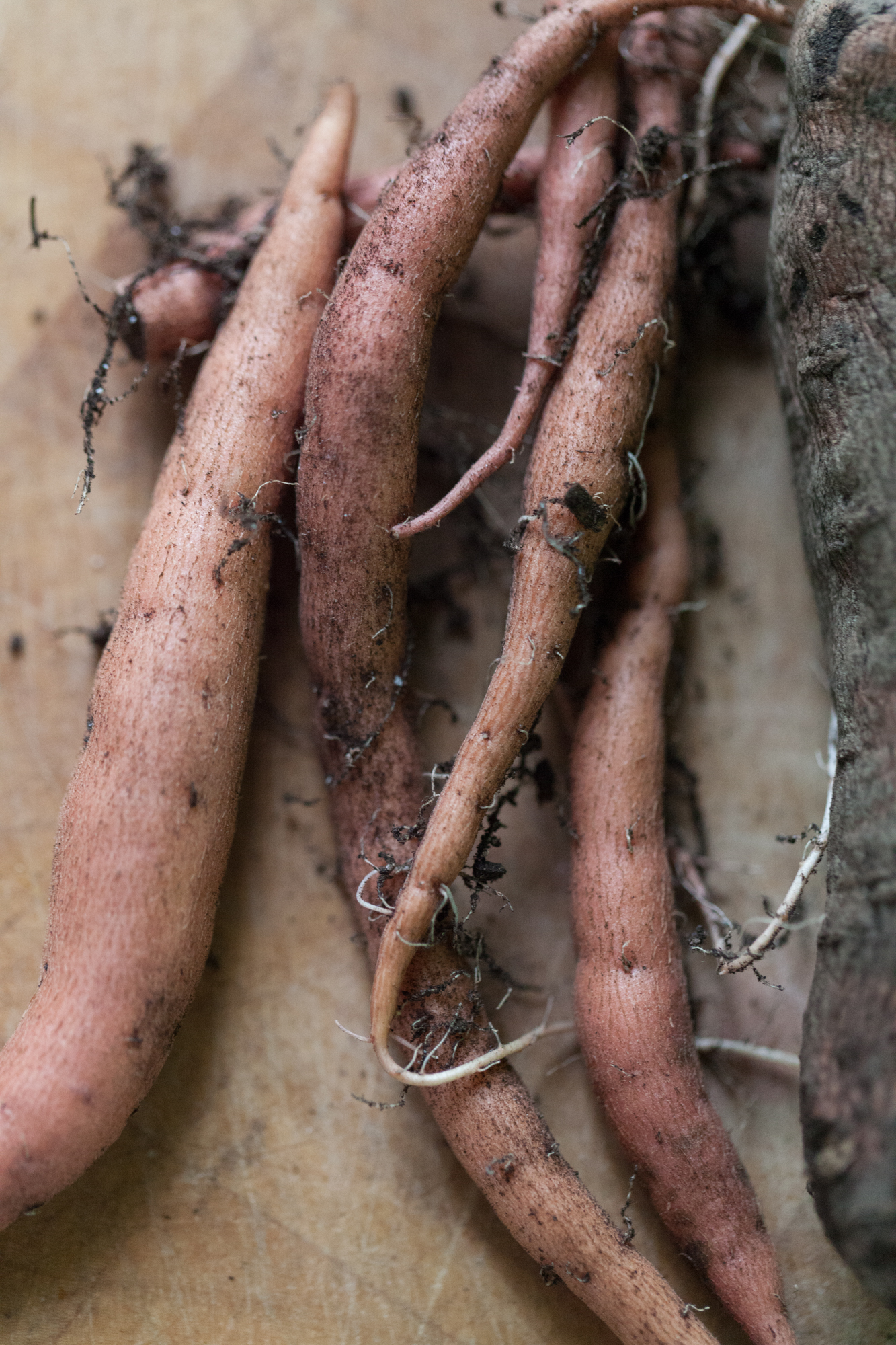 These sweet potatoes were harvested in my container garden indoors after 4 months of growth.  Photo:   Summer Rayne Oakes
