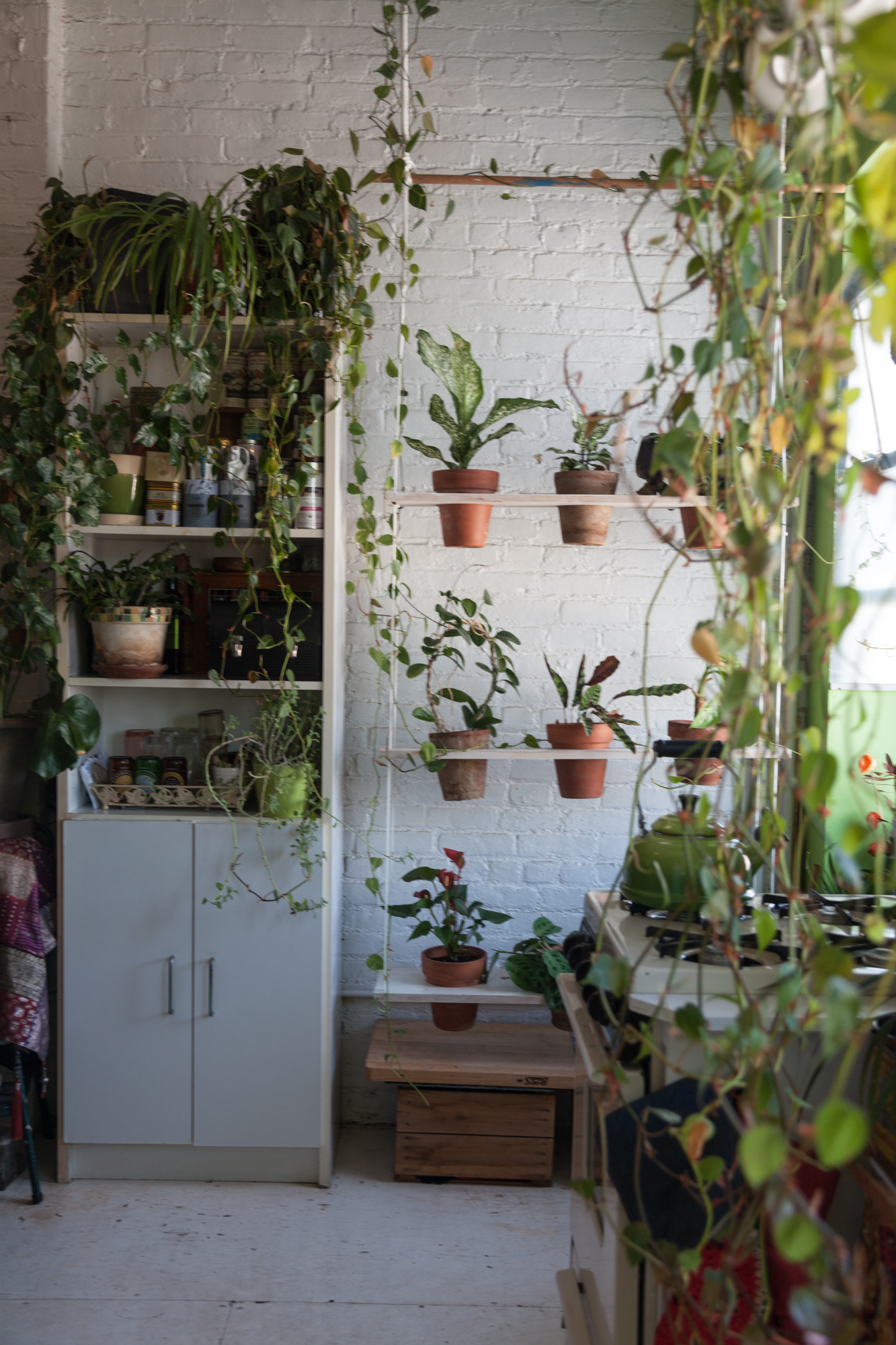A look at the vertical swing garden a year later. I moved some of the more sensitive  Calatheas  out of the garden and replaced with an  Anthurium  and another  Dieffenbachia   bausei  . You may not be able to tell from this shot, but the  Stephanotis floribunda is now climbing up the ropes.