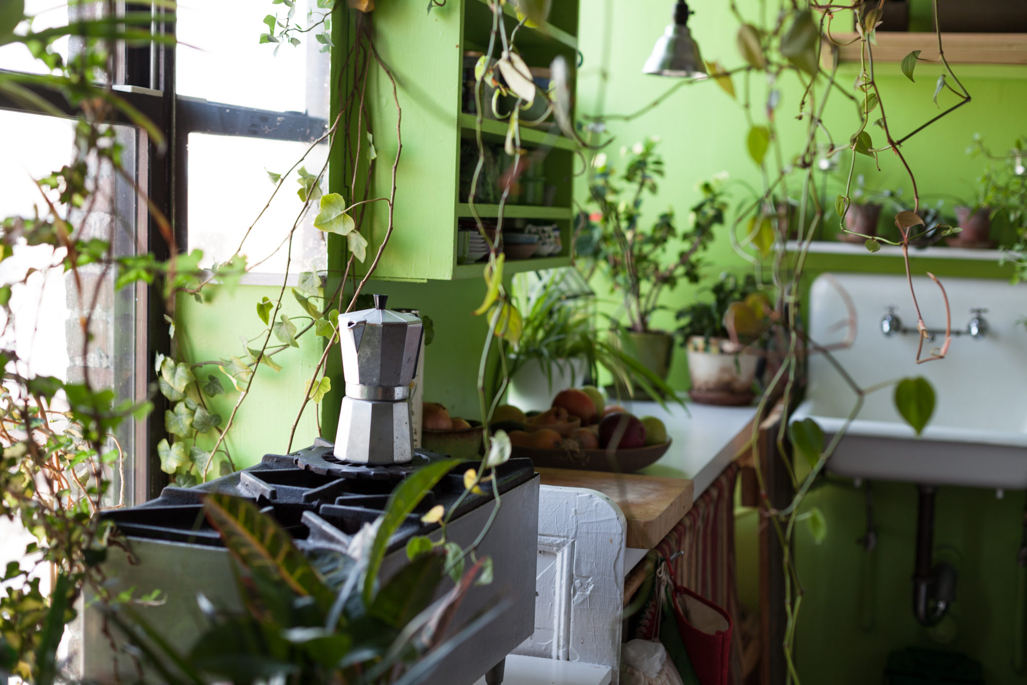 My ivy and philodendrons have been in my drafty, north-facing windows for over five years now and have shown no sign of distress. This tells me that they're okay with drafty conditions in winter.
