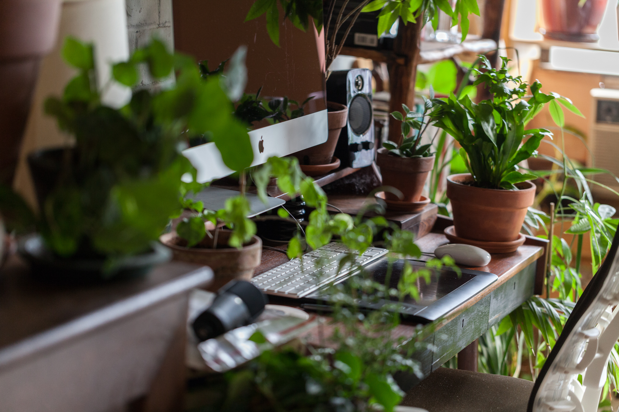 I often use terracotta clay pots for my plants for a variety of reasons, namely because they are affordable and also help wick away moisture and aerate the soil. This is a shot from my workspace.