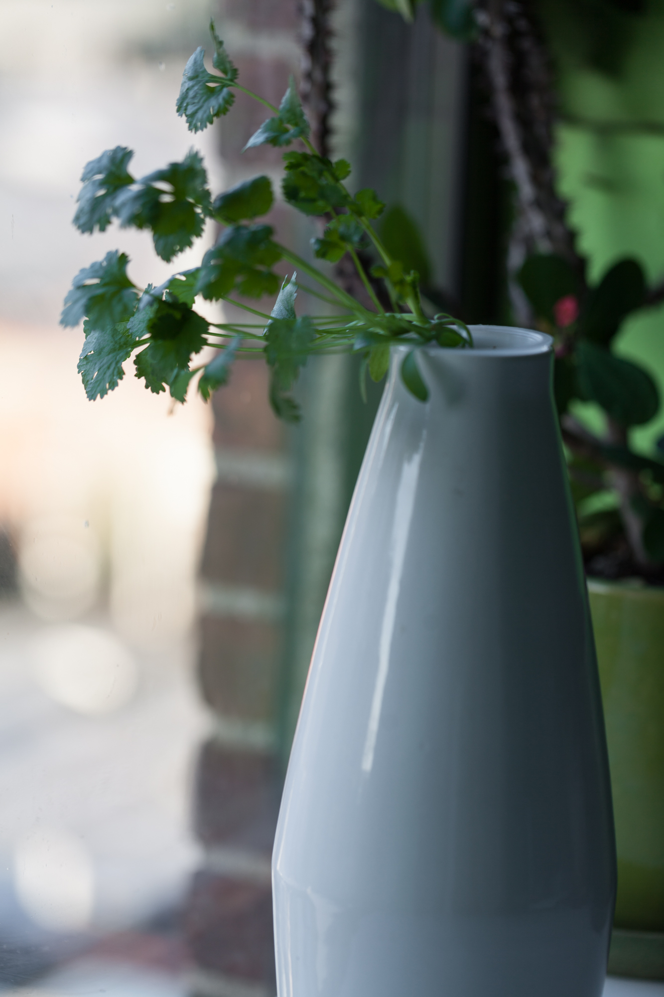 I have a couple hydroponic Amphora vases from  Cloud Farms , which I like to grown cilantro and basil out of.