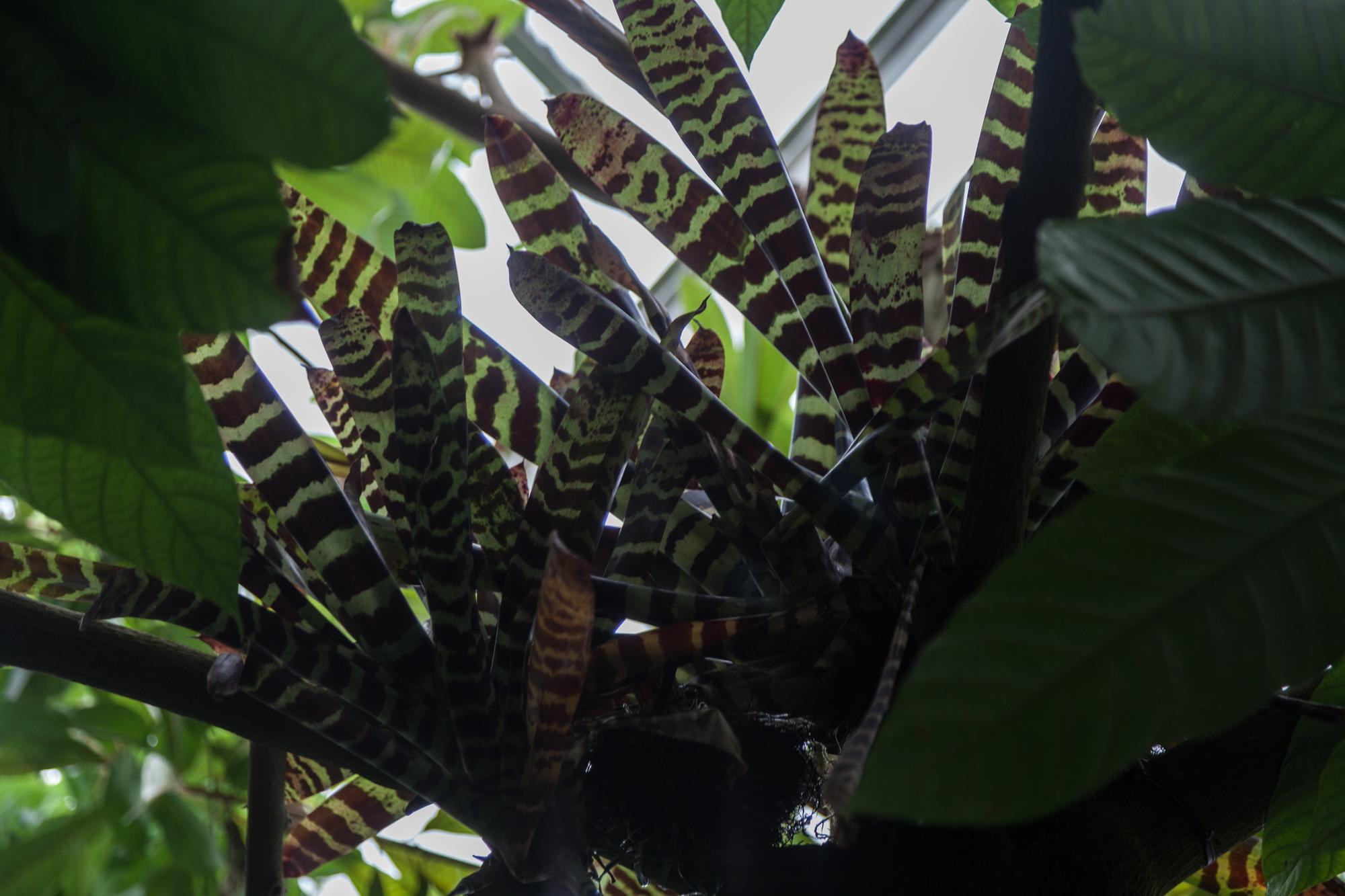 bromeliads-nybg.jpg
