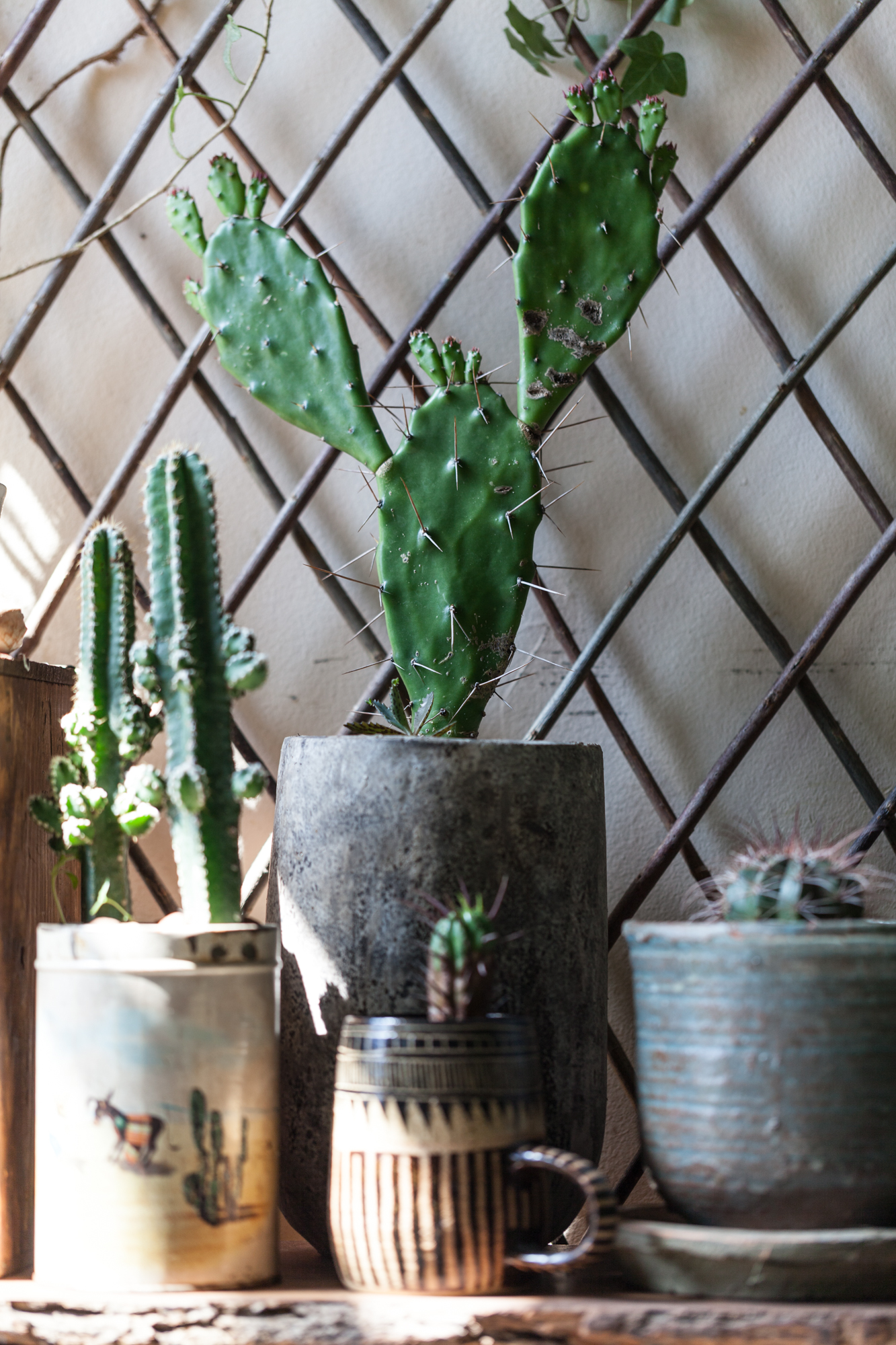 A little snippet of love in my Cacti Corner.
