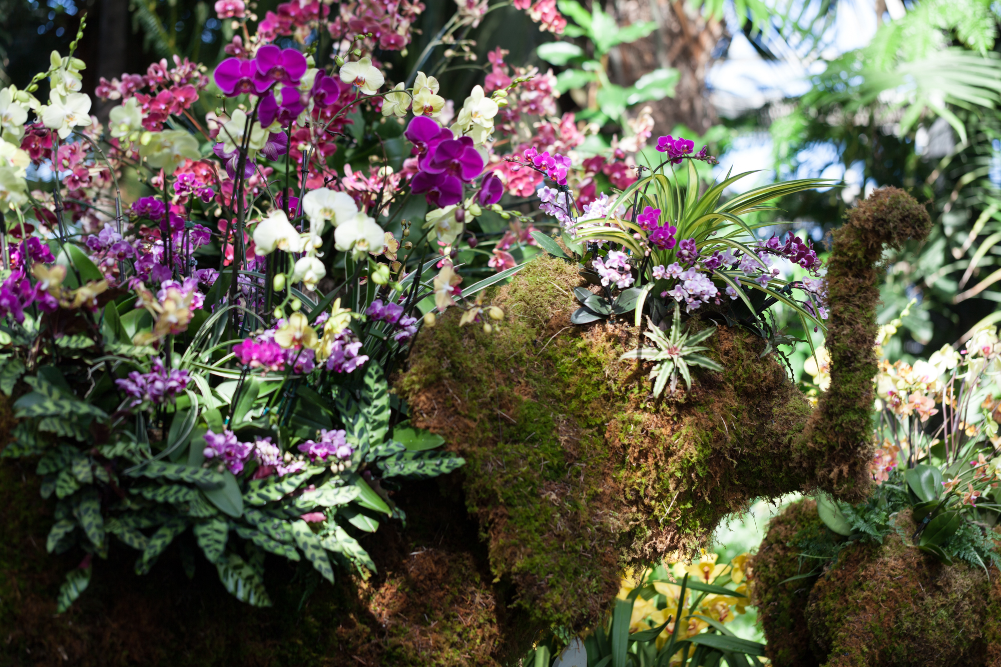 orchids-nybg.jpg