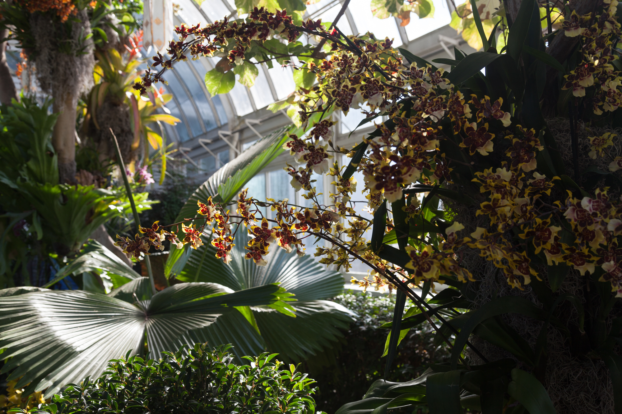 nybg-orchid-show.jpg