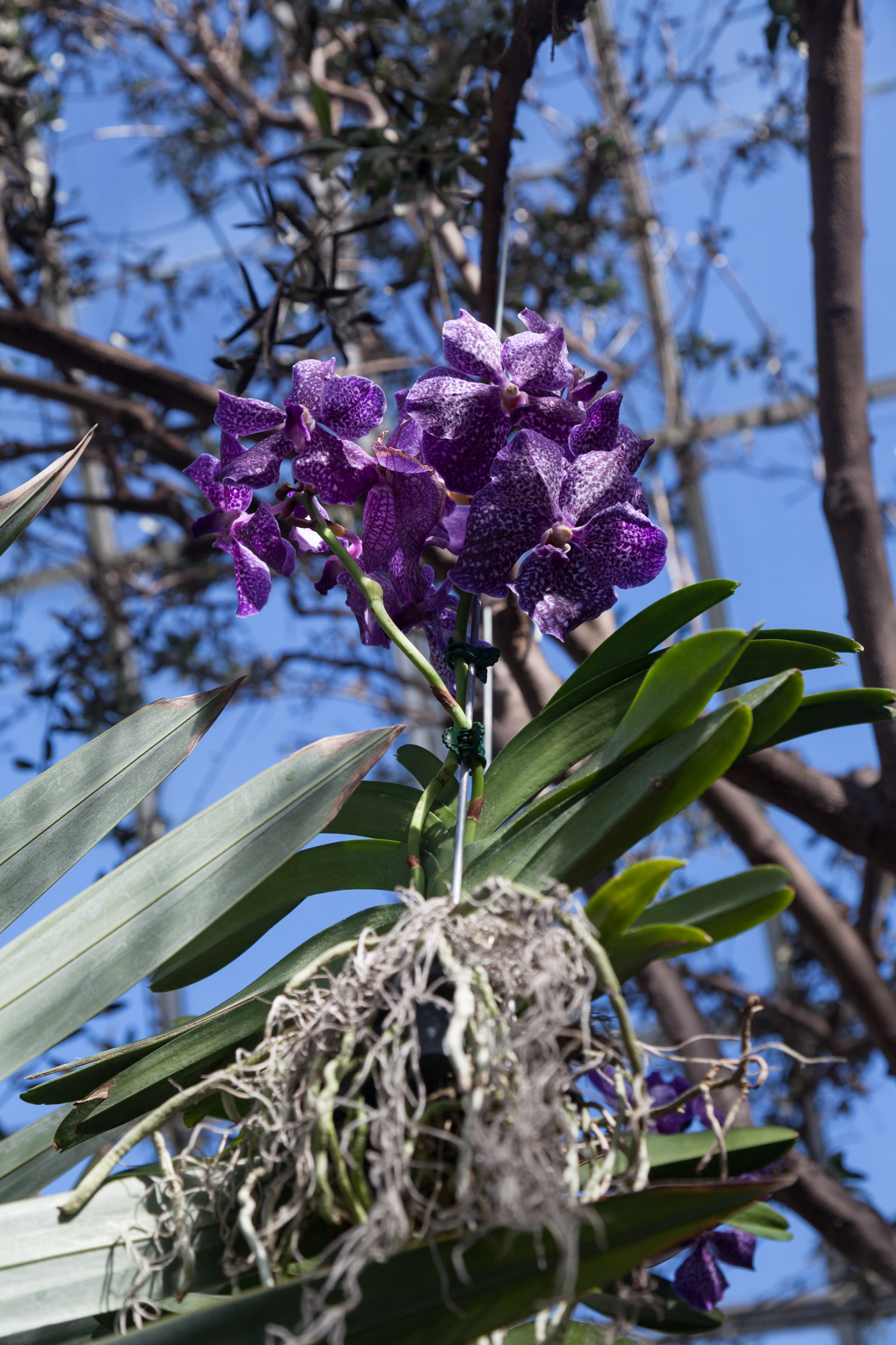 orchid-epiphytic.jpg