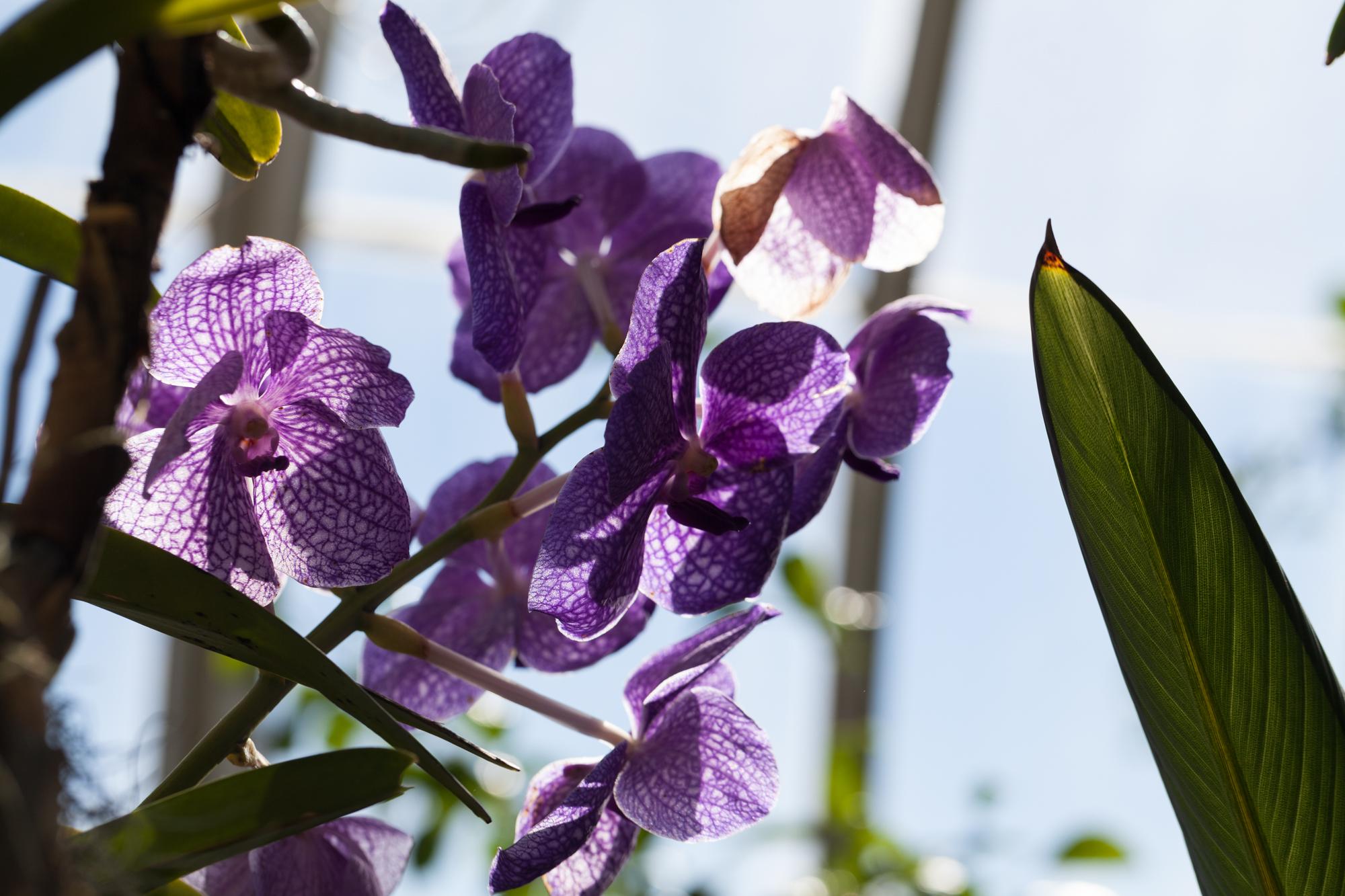 orchids-nybg-homestead-brooklyn.jpg