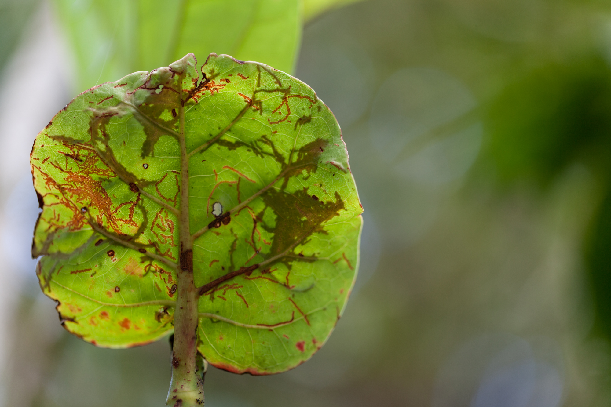 insects-and-leaves-CATIE.jpg