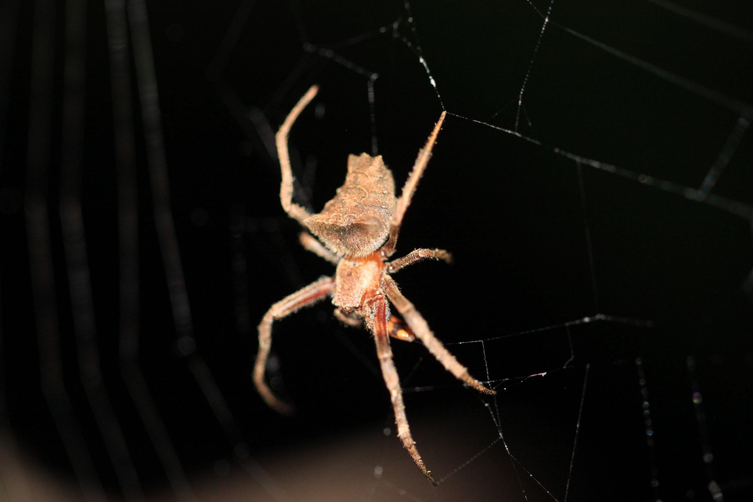 spider-costa-rica.jpg