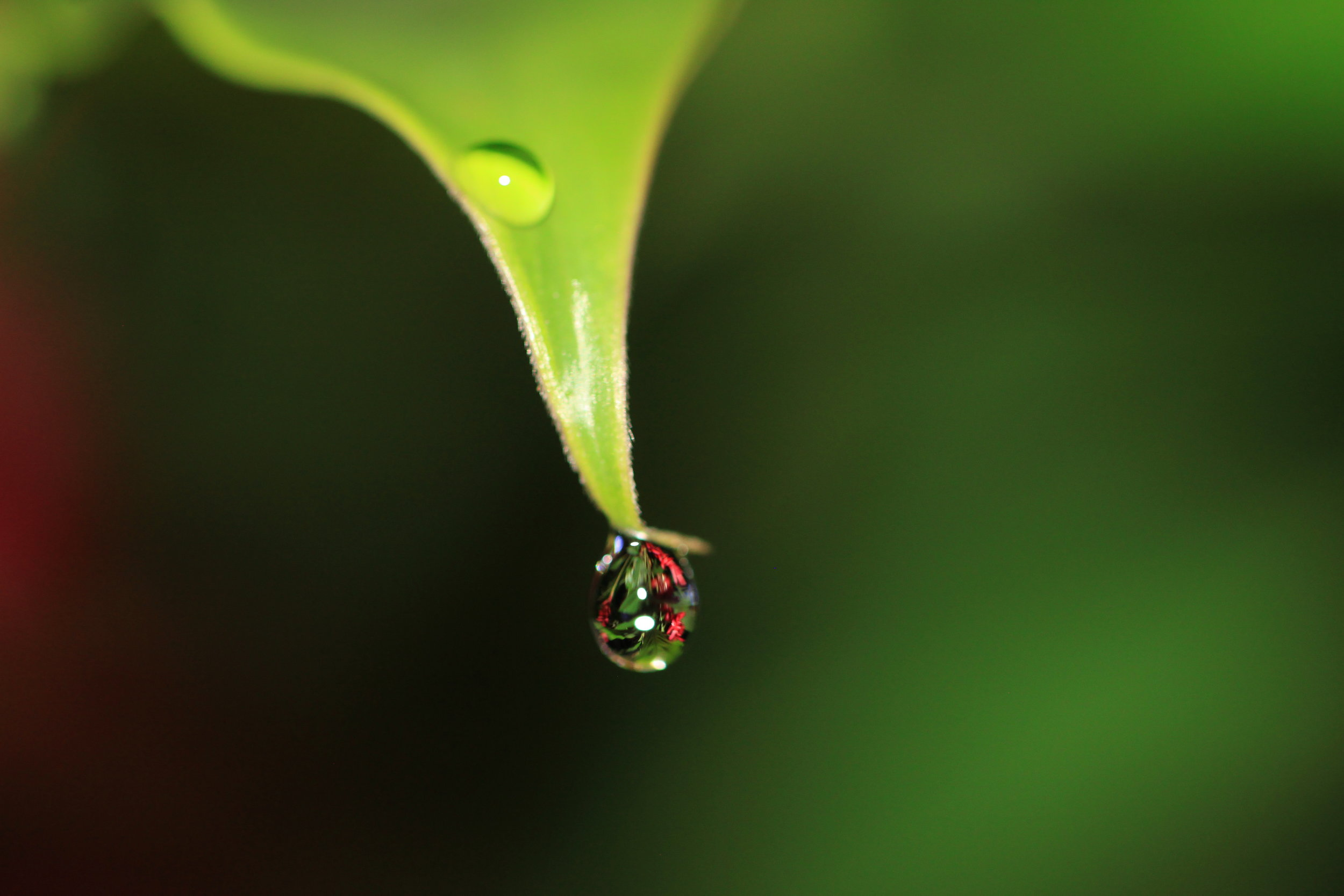 dew-drop-at-nigh-Costa-Rica.jpg