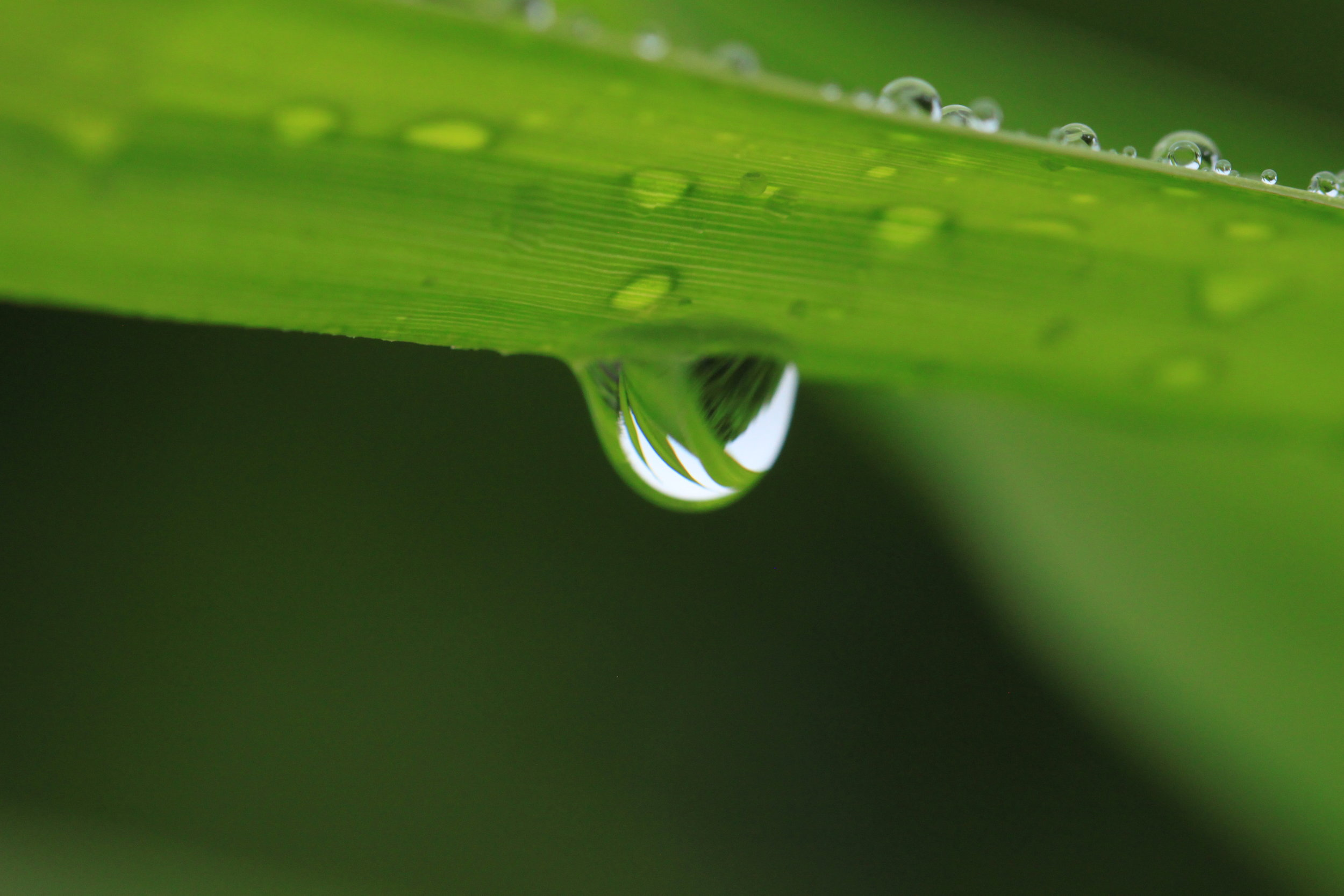 dew-drop-on-grass-costa-rica.jpg