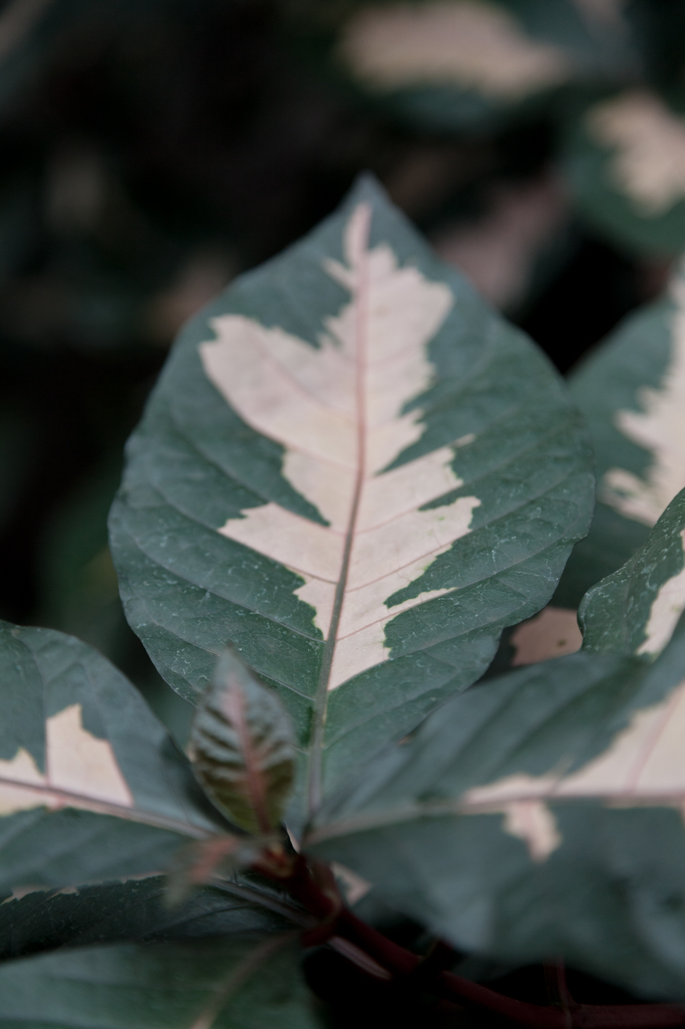 Gorgeous coloration, plant unknown.