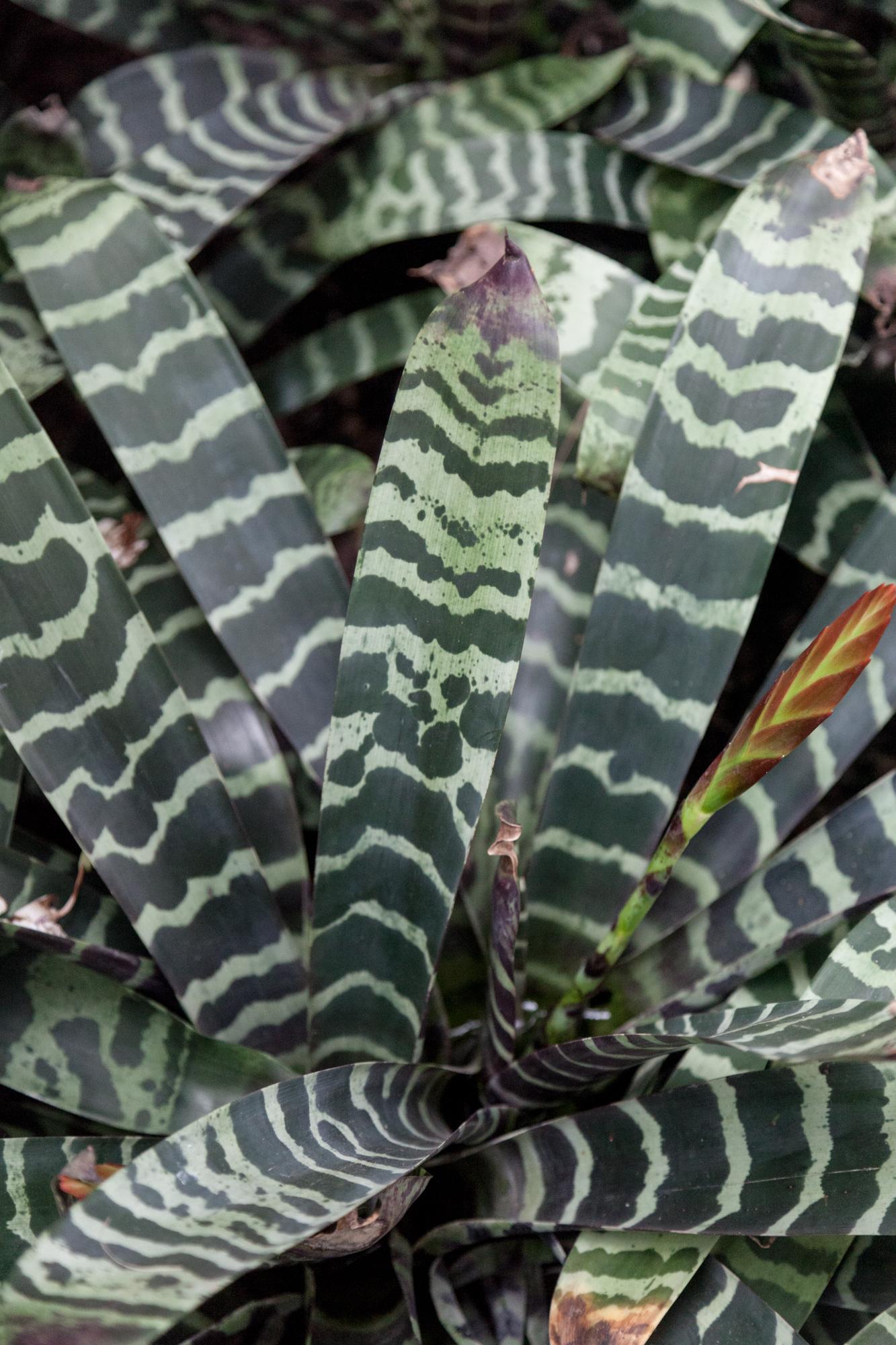 Bromeliad, up-close