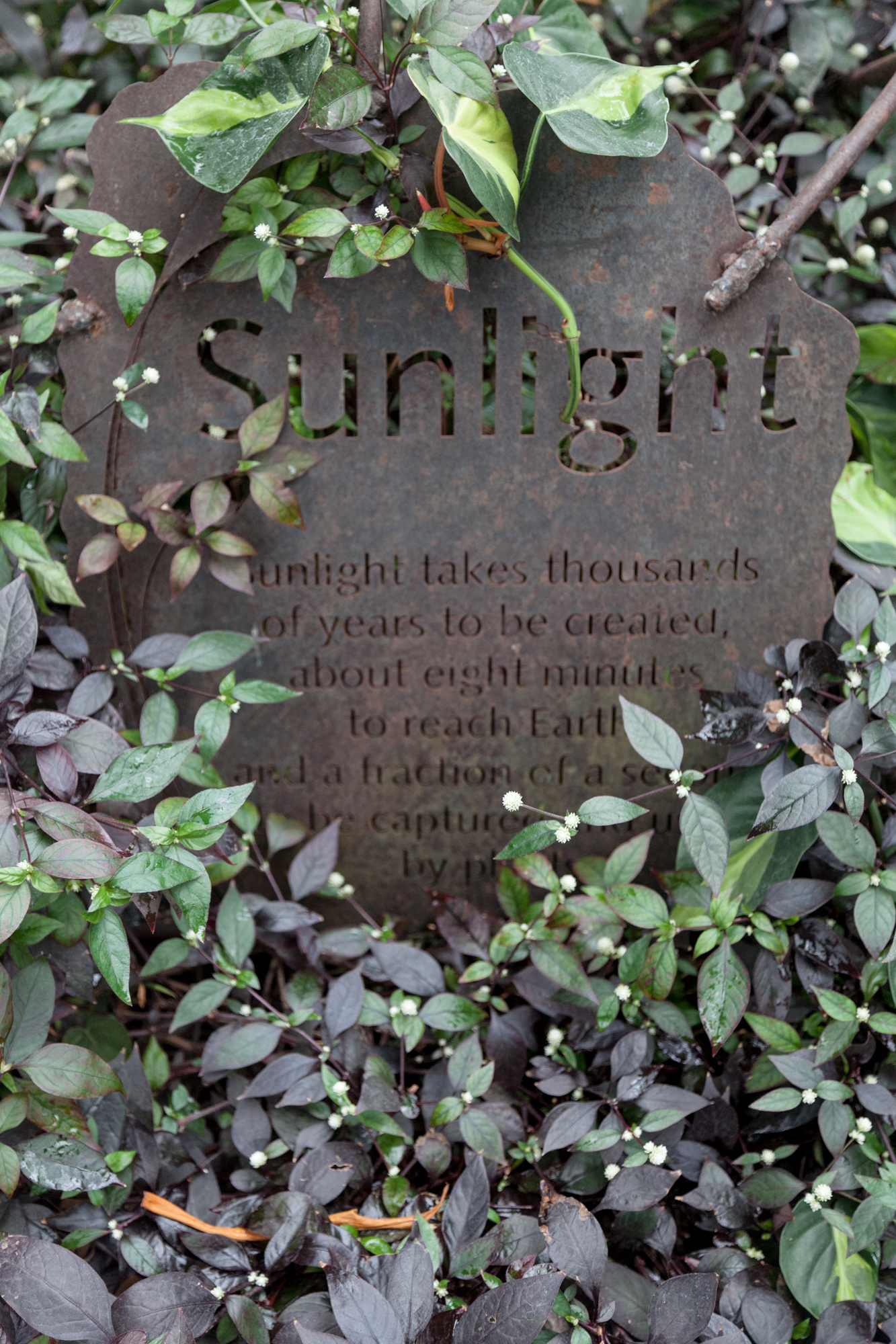 Sunlight takes thousands of years to be created, about eight minutes to reach earth, and a fraction of a second to be captured and used by a plant.