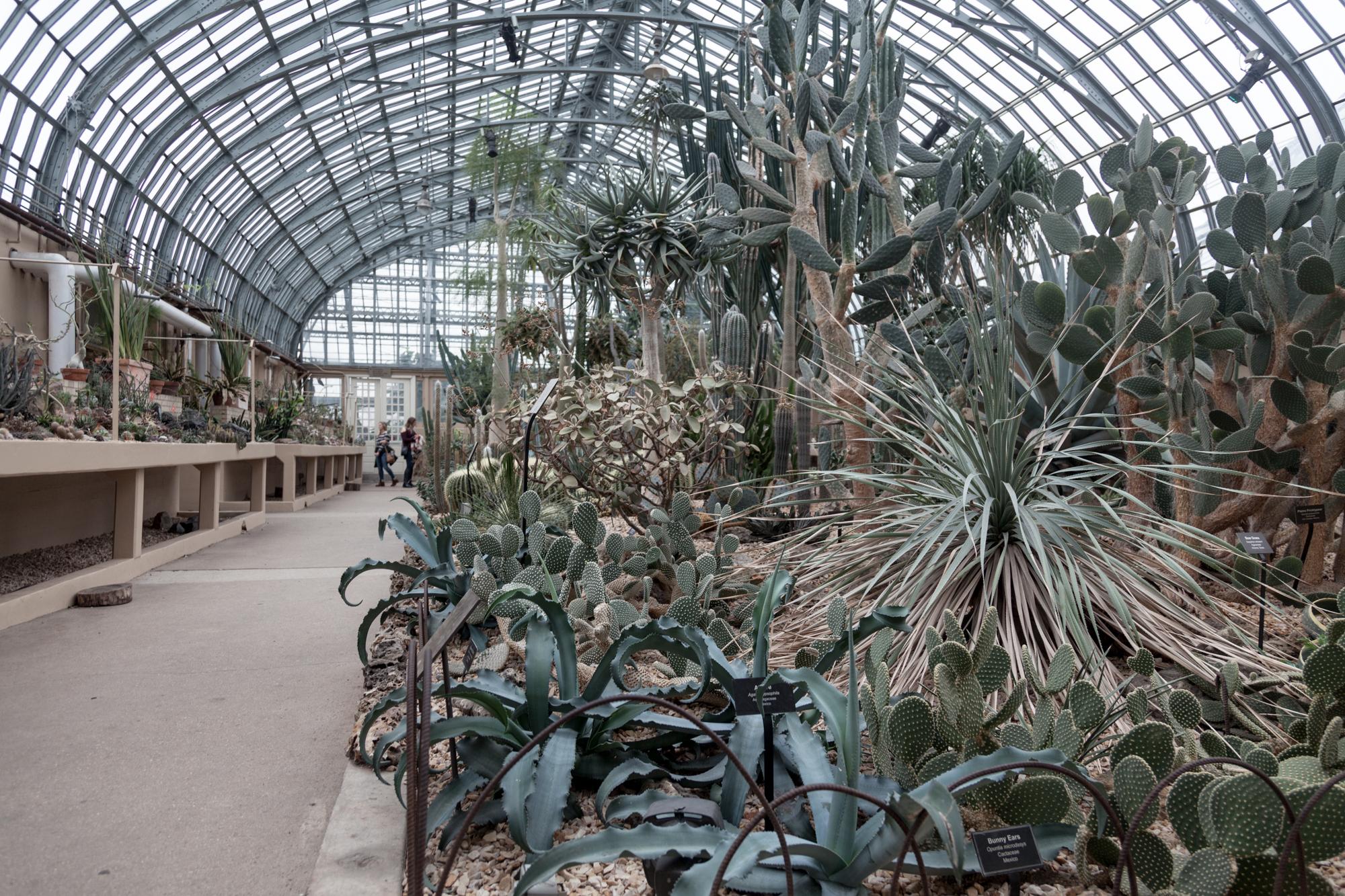 Cacnti-Room-Garfield-Park-Conservatory.jpg