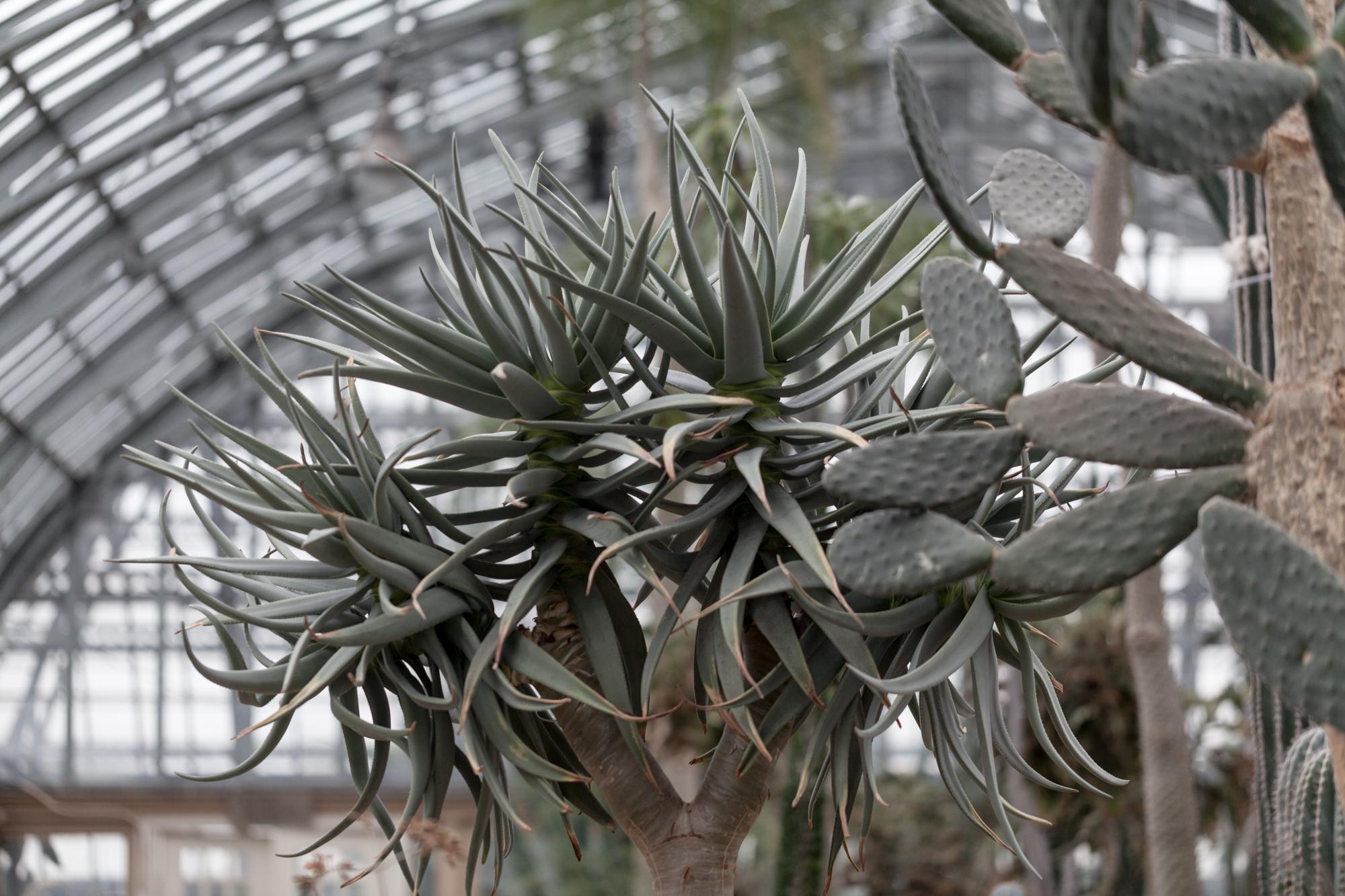 Yucca-Garfield-Park-Conservatory.jpg