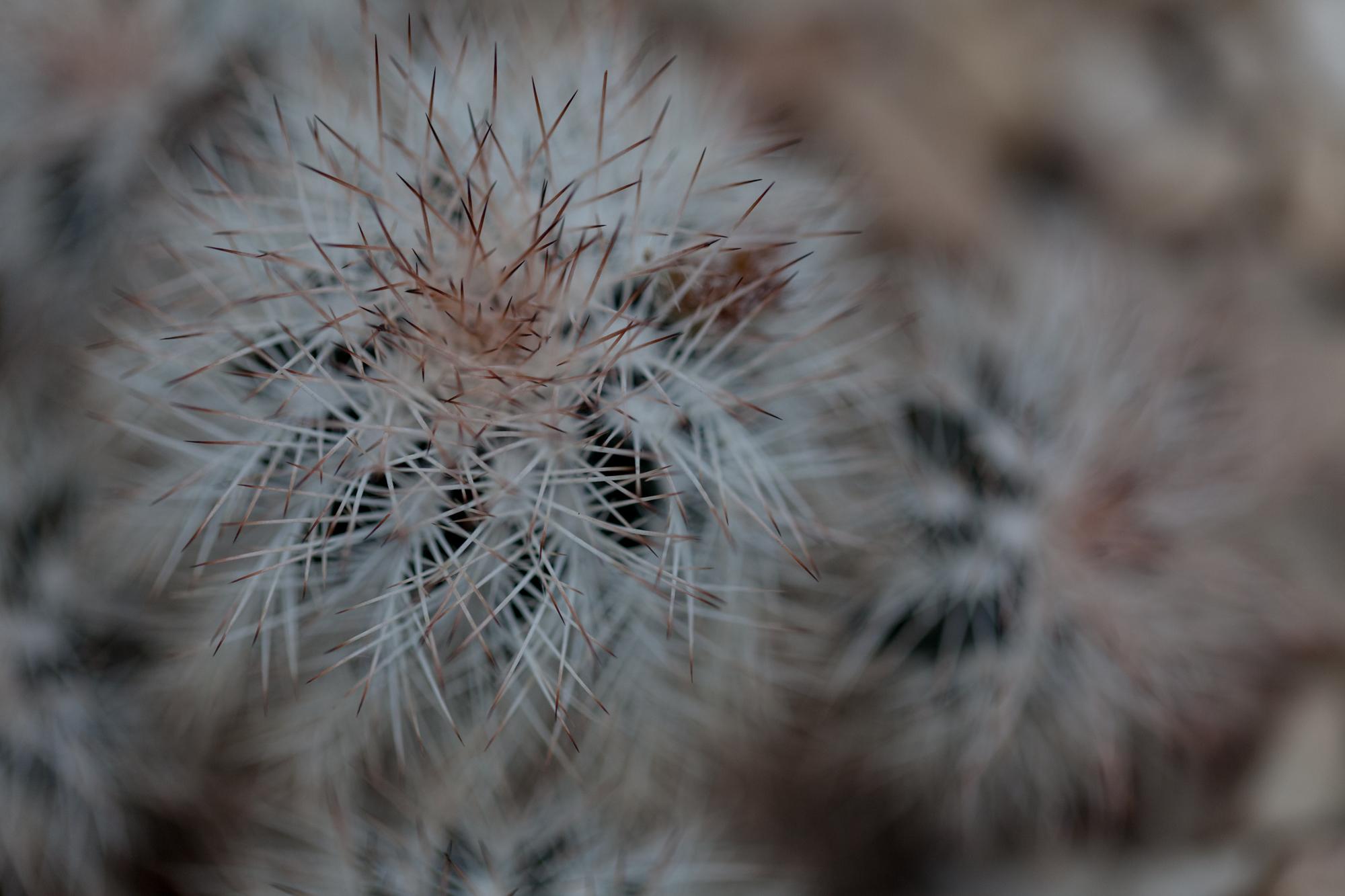 cacti-Garfield-Park-Conservatory-Homestead-Brooklyn.jpg