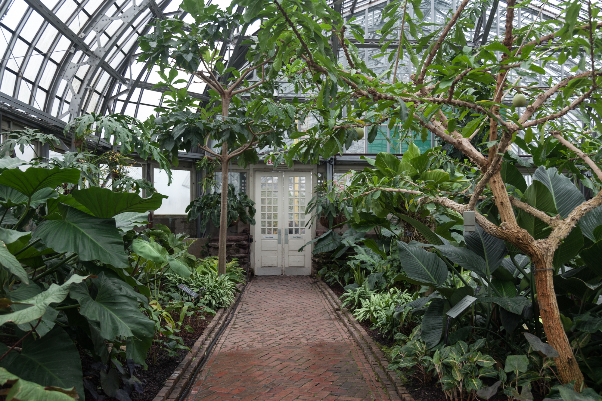 Aroid-House-Garfield-Park-Conservatory-Homestead-Brooklyn.jpg
