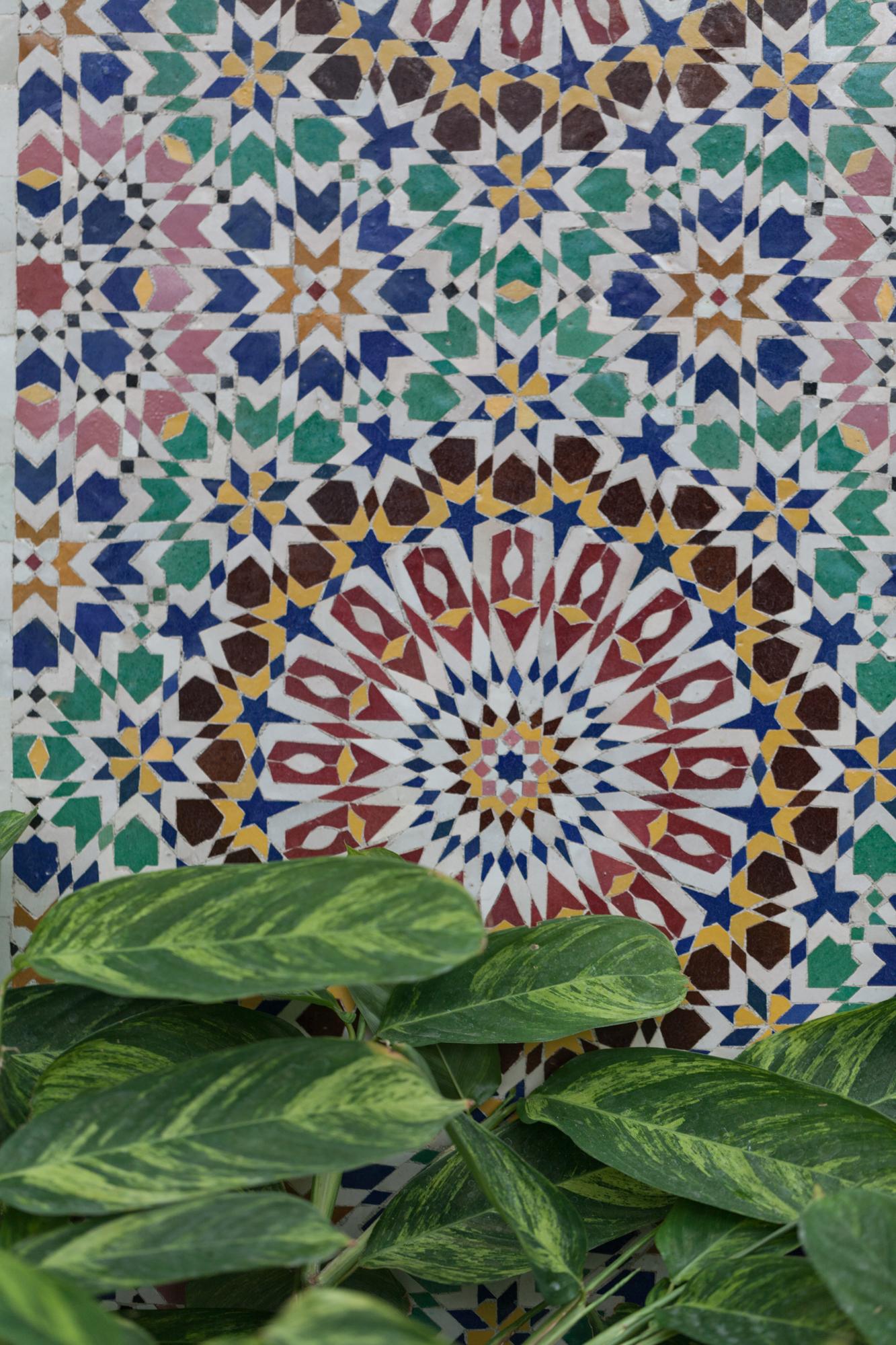 mosaic-calathea.jpg