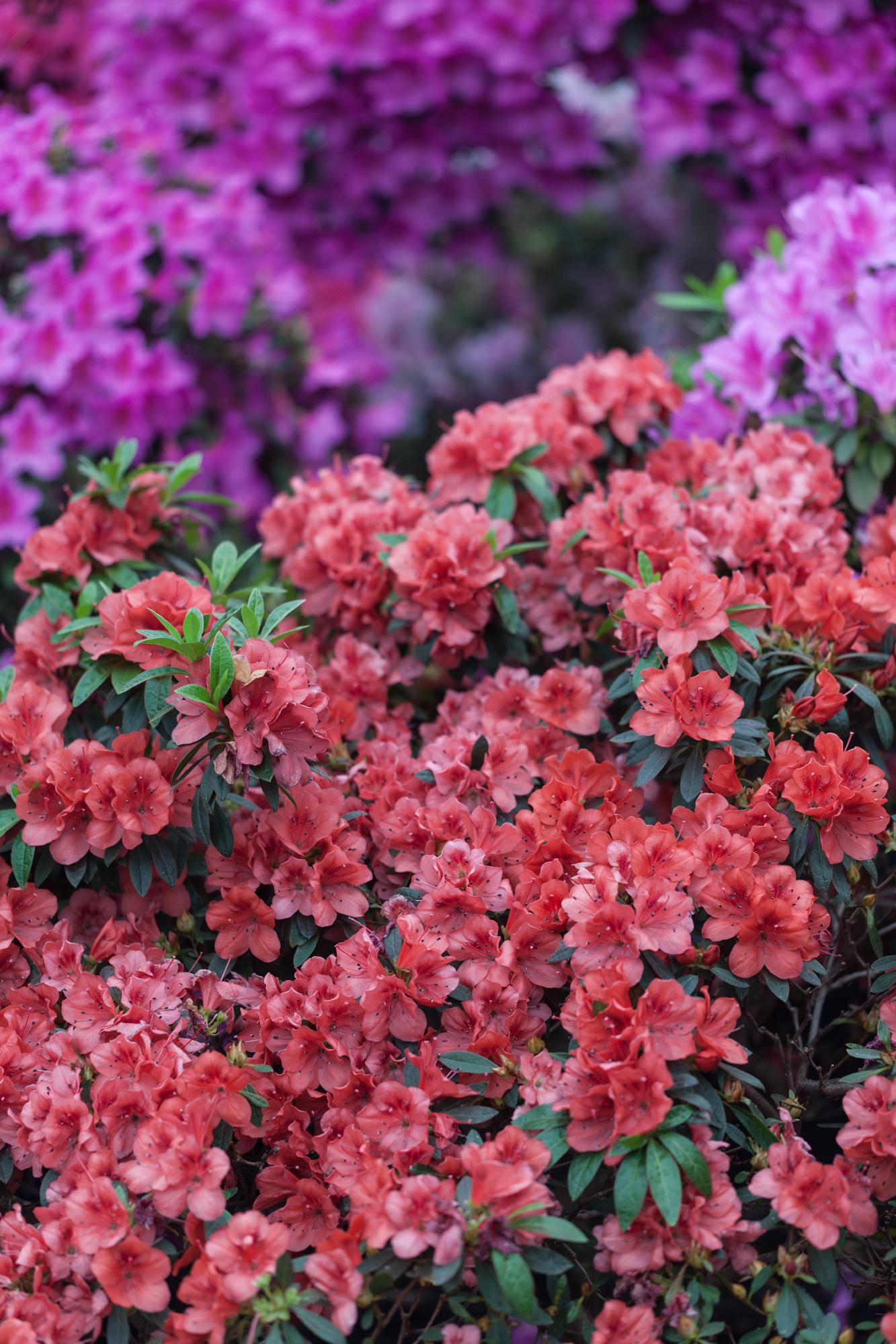 flowers-Garfield-Conservatory-Chicago-Homestead-Brooklyn.jpg