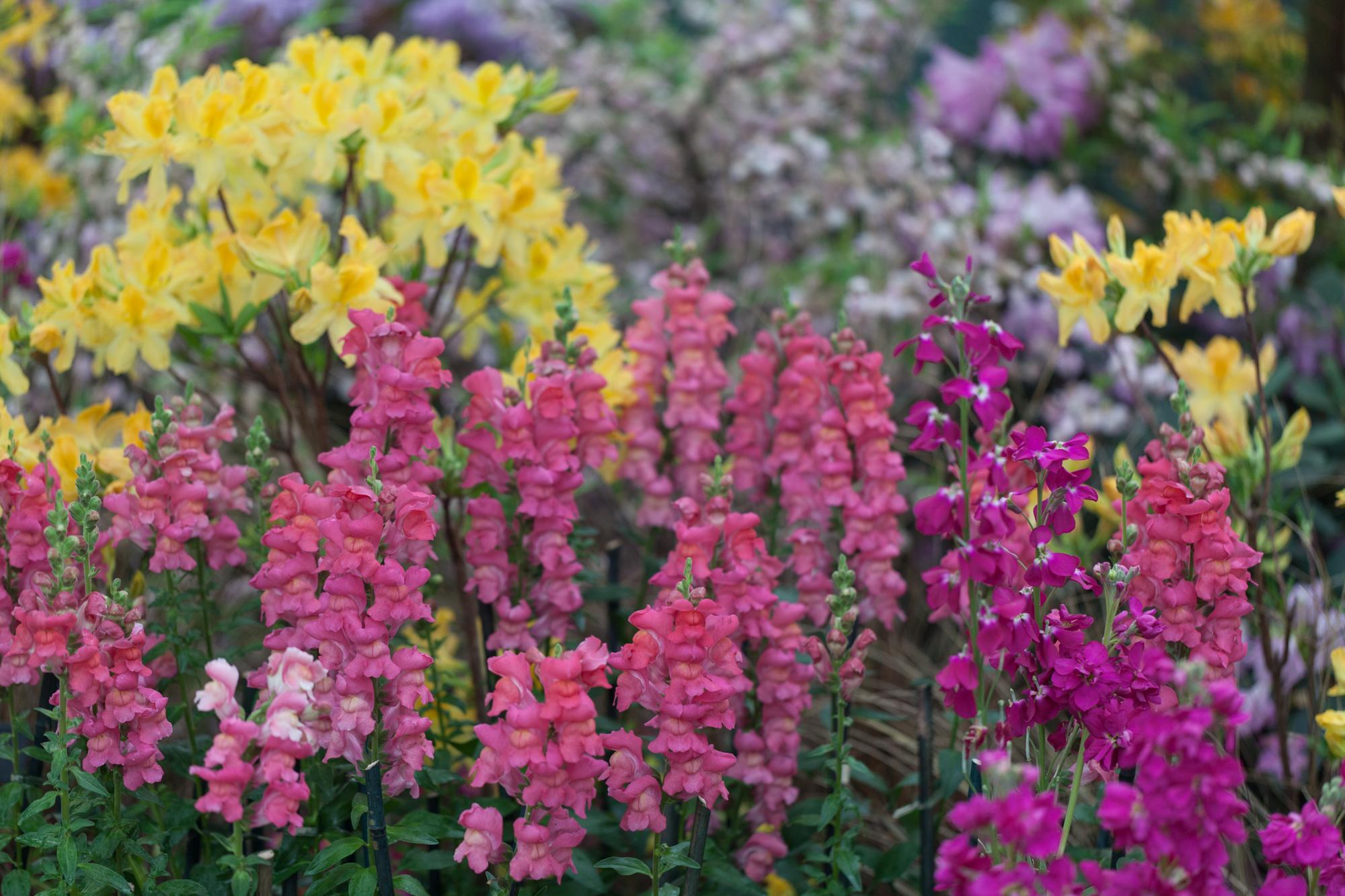 Flowers-Garfield-Park-Conservatory.jpg
