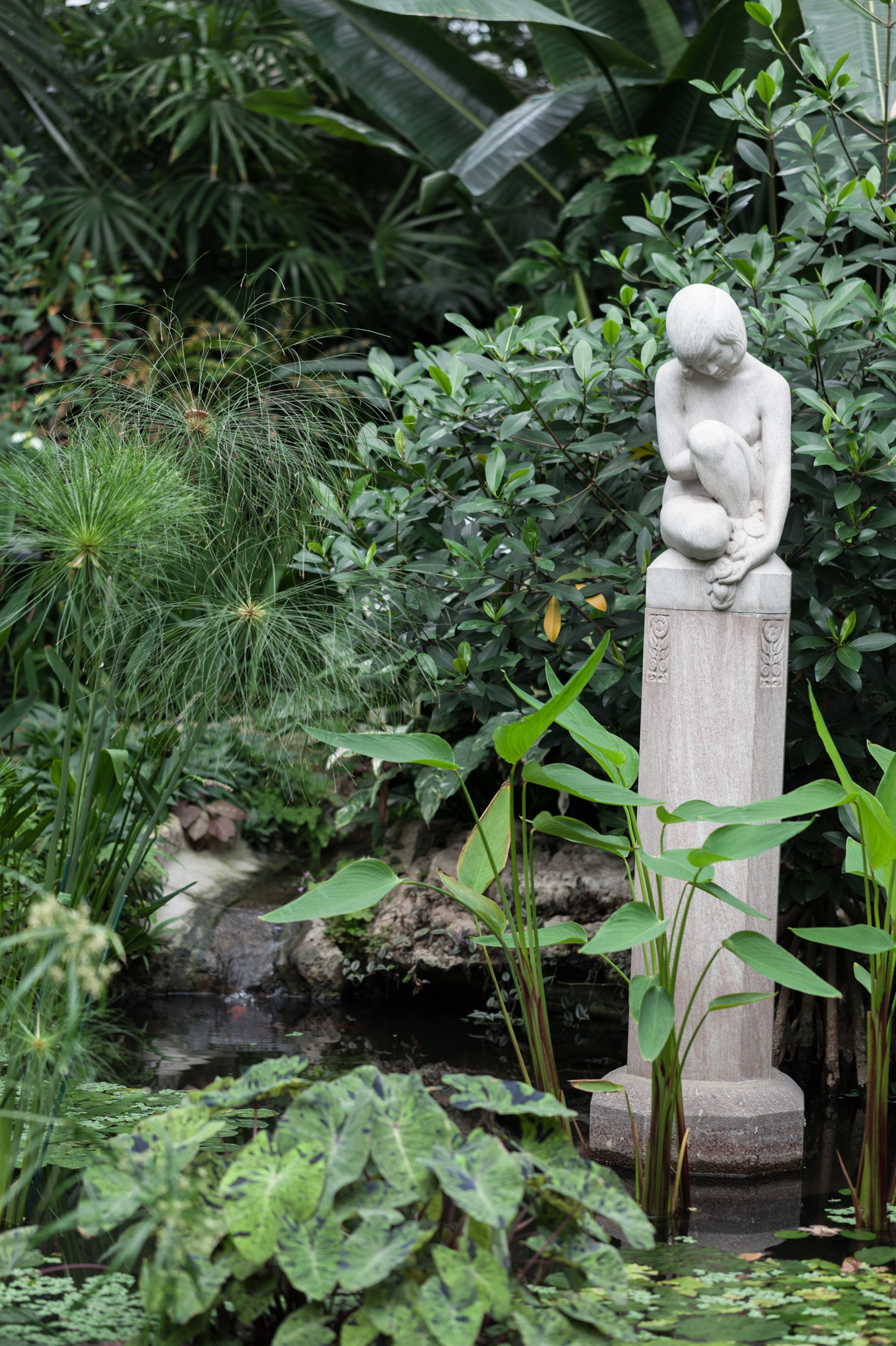 Some taro leaves and papyrus growing up out of the pond at the Lincoln Park Conservatory. I love how contemplative the statue is, perched above the water.