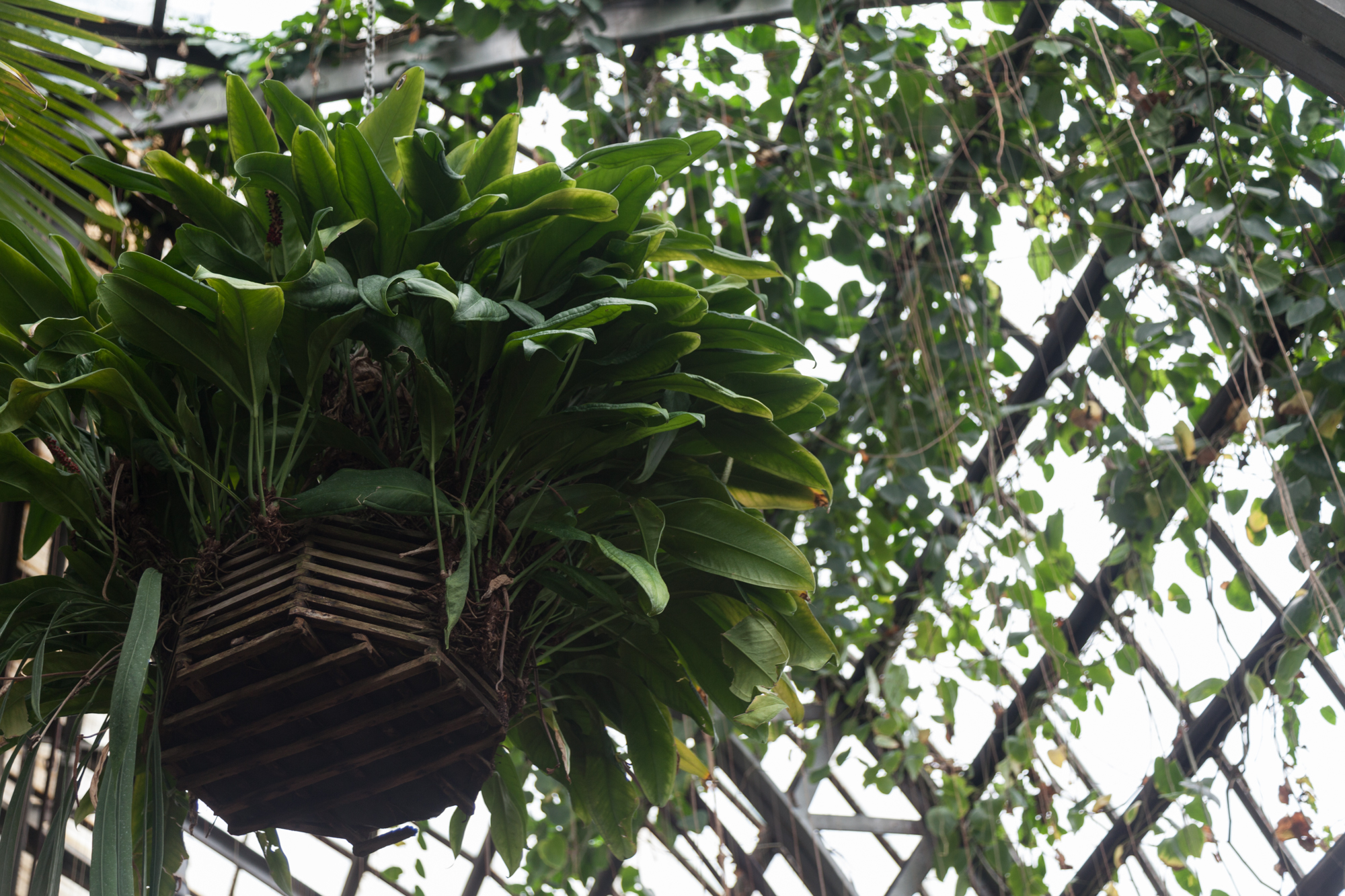 orchid-Lincoln-Park-Conservatory.jpg
