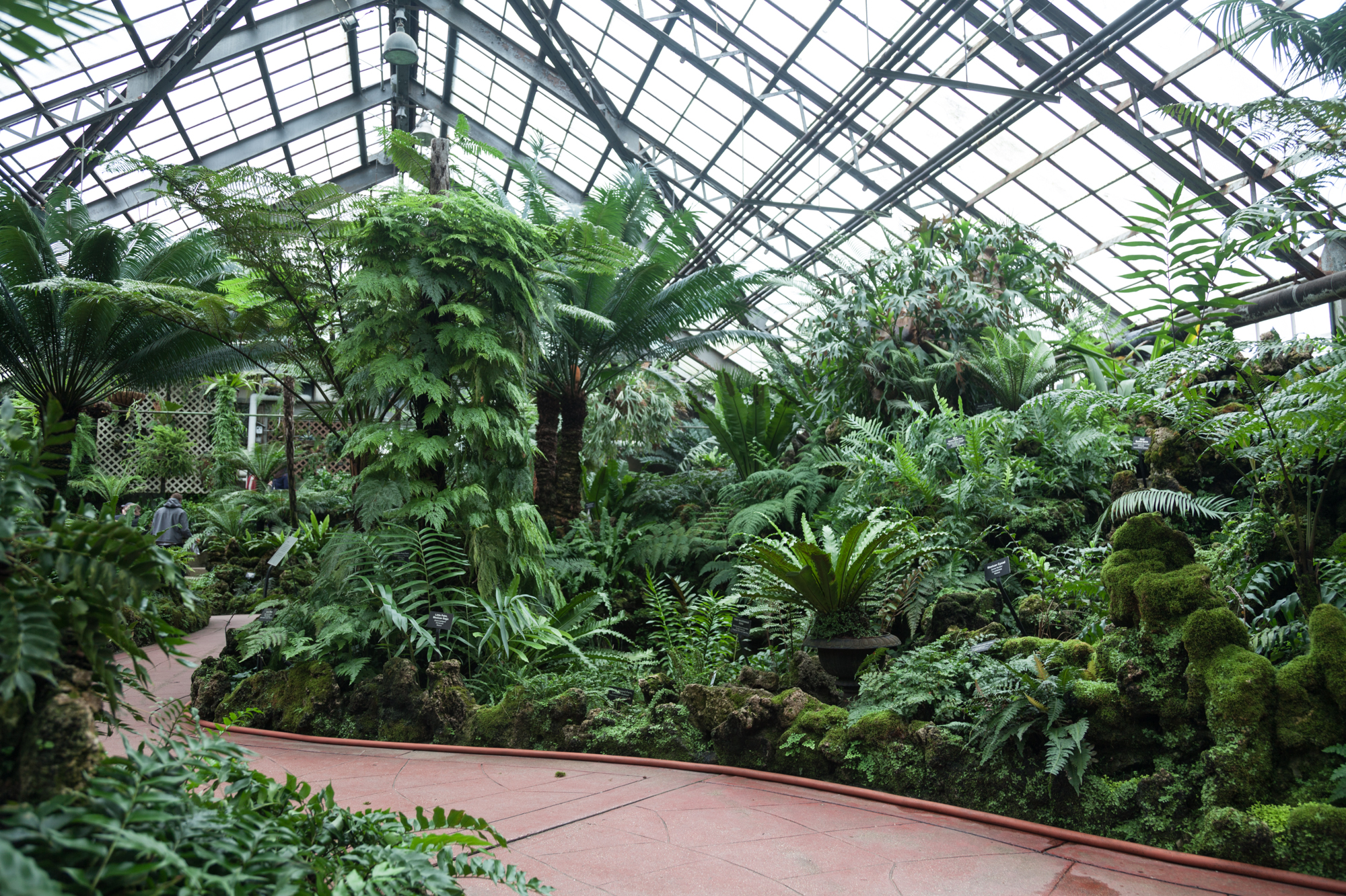 Lincoln-Park-Conservatory-Fern-Room.jpg