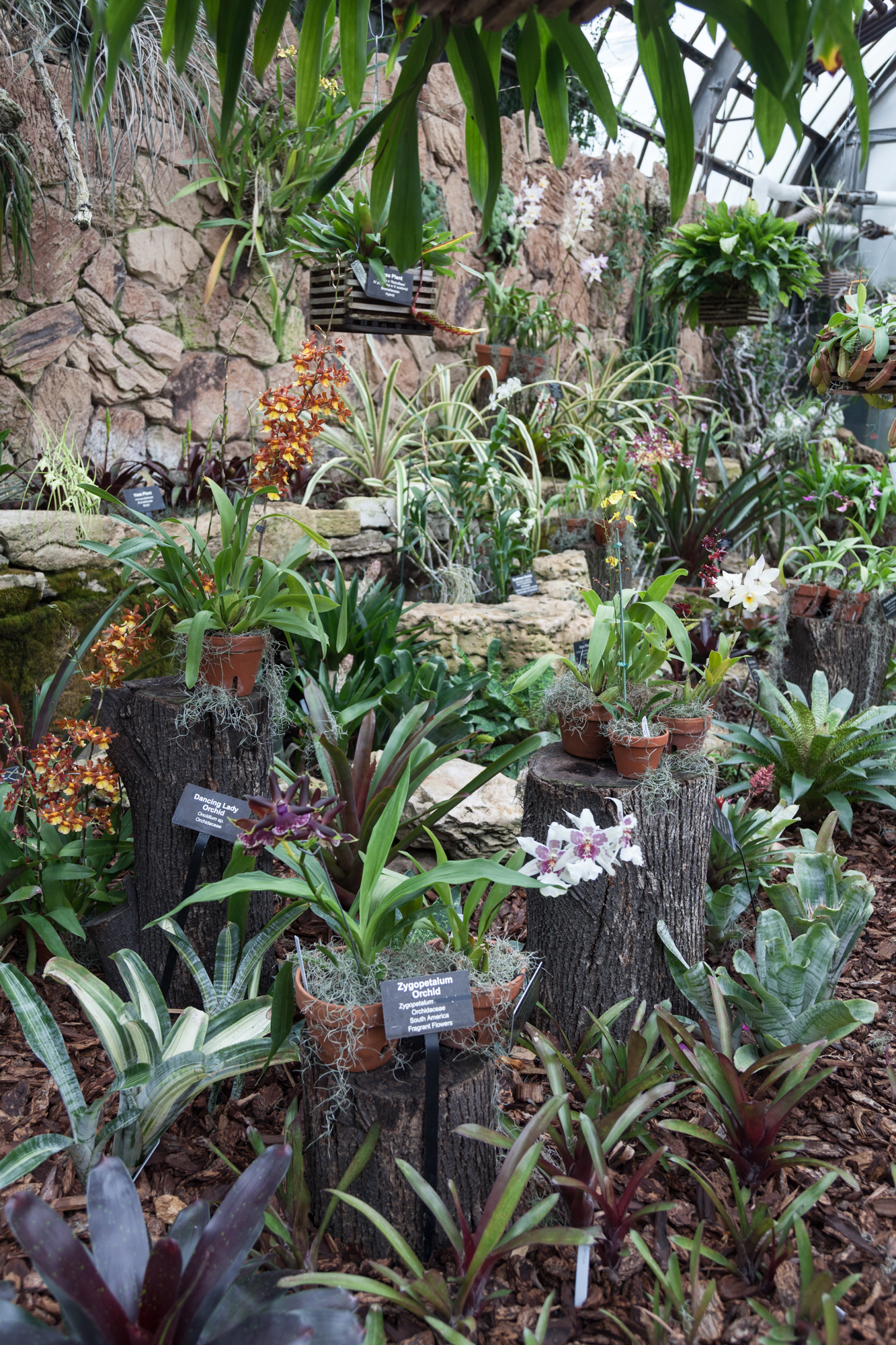 orchids-Lincoln-Park-Conservatory.jpg