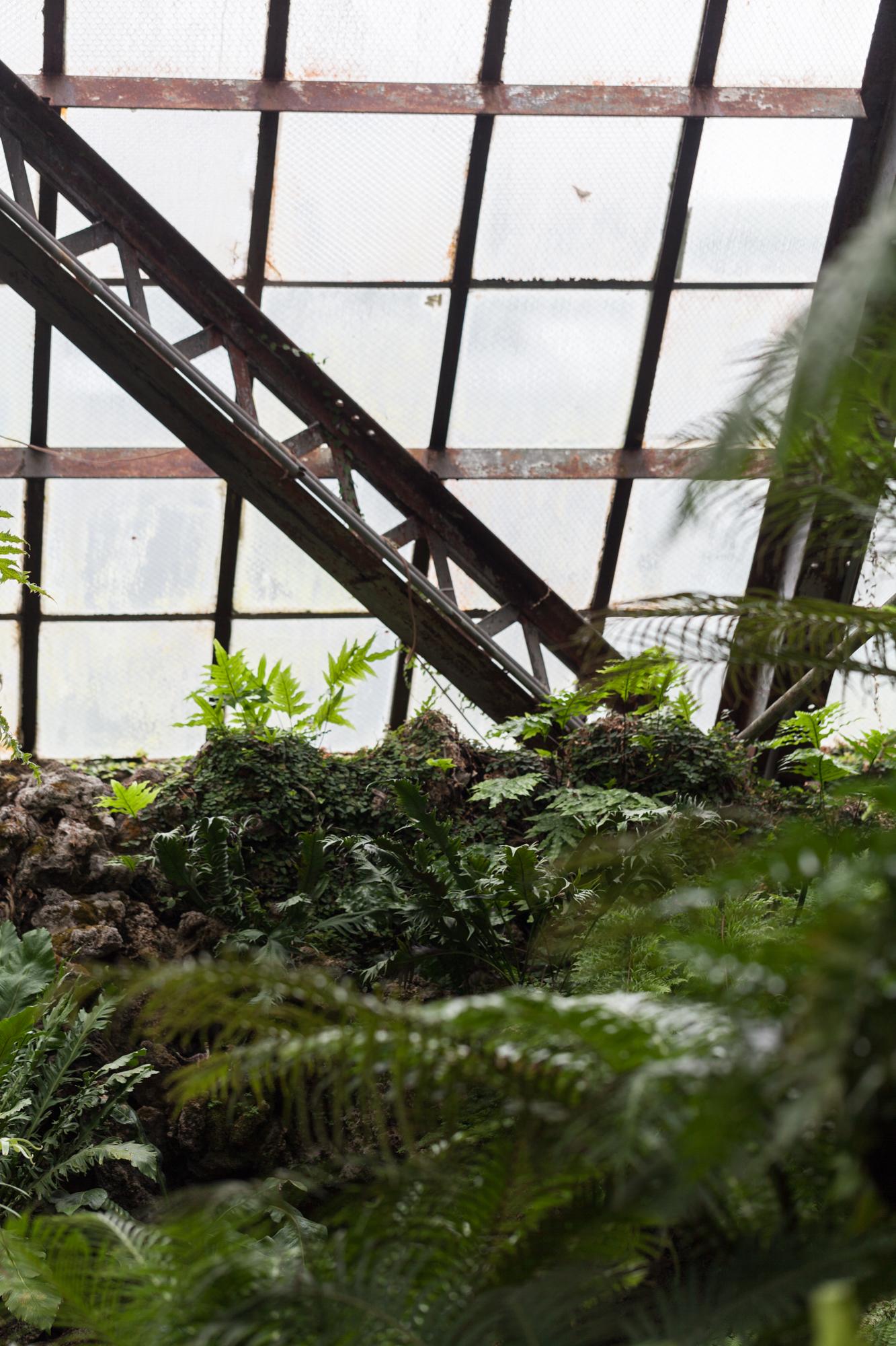 Lincoln-Park-Conservatory-Ferns.jpg