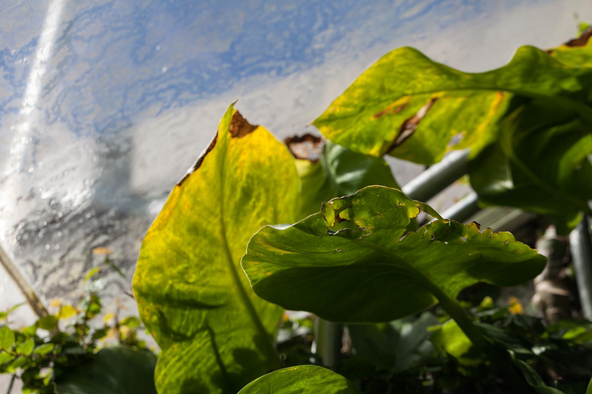 pothos-allan-garden-conservatory.jpg