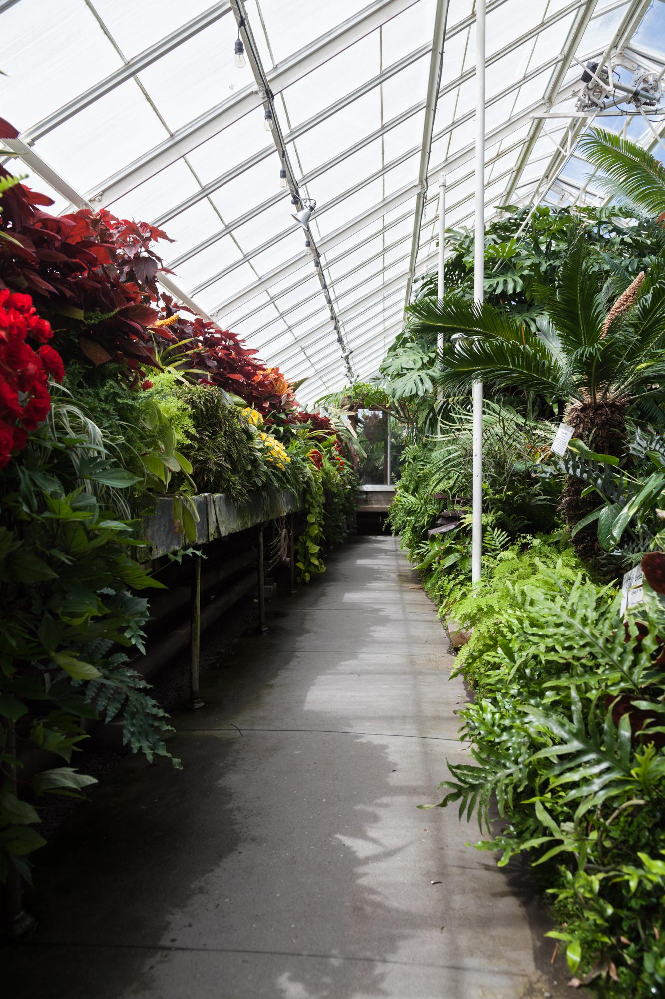 Fern-Bromeliad-Room-Volunteer-Park-Conservatory.jpg
