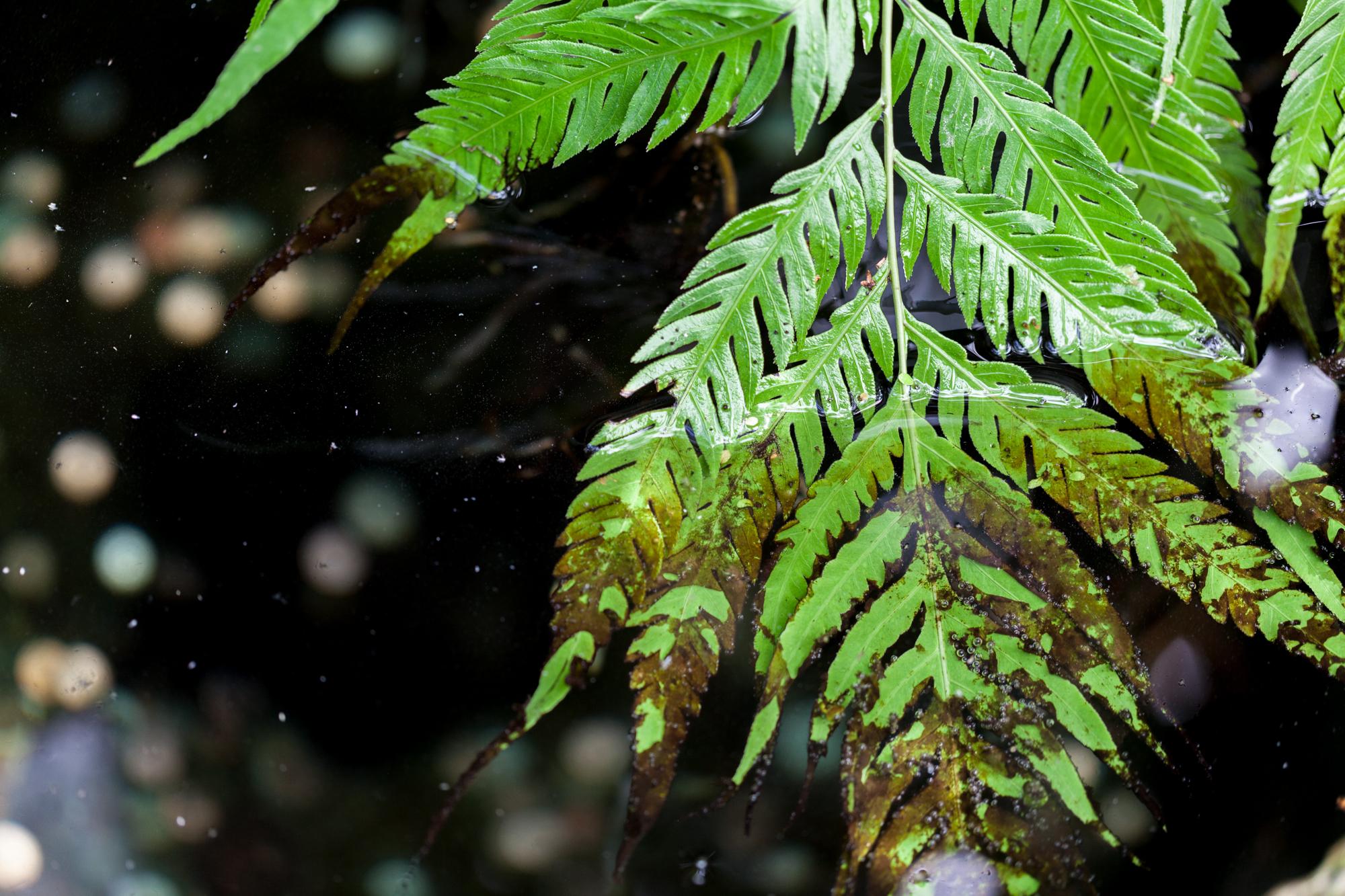fern-in-water-volunteer-park-conservatory.jpg