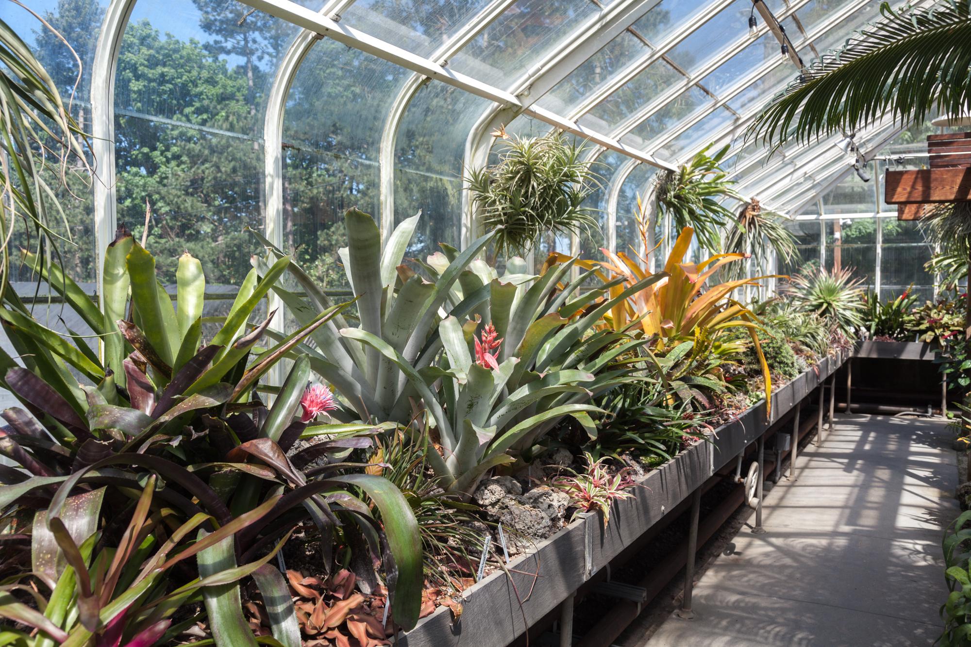 bromeliads-Volunteer-Park-Conservatory.jpg