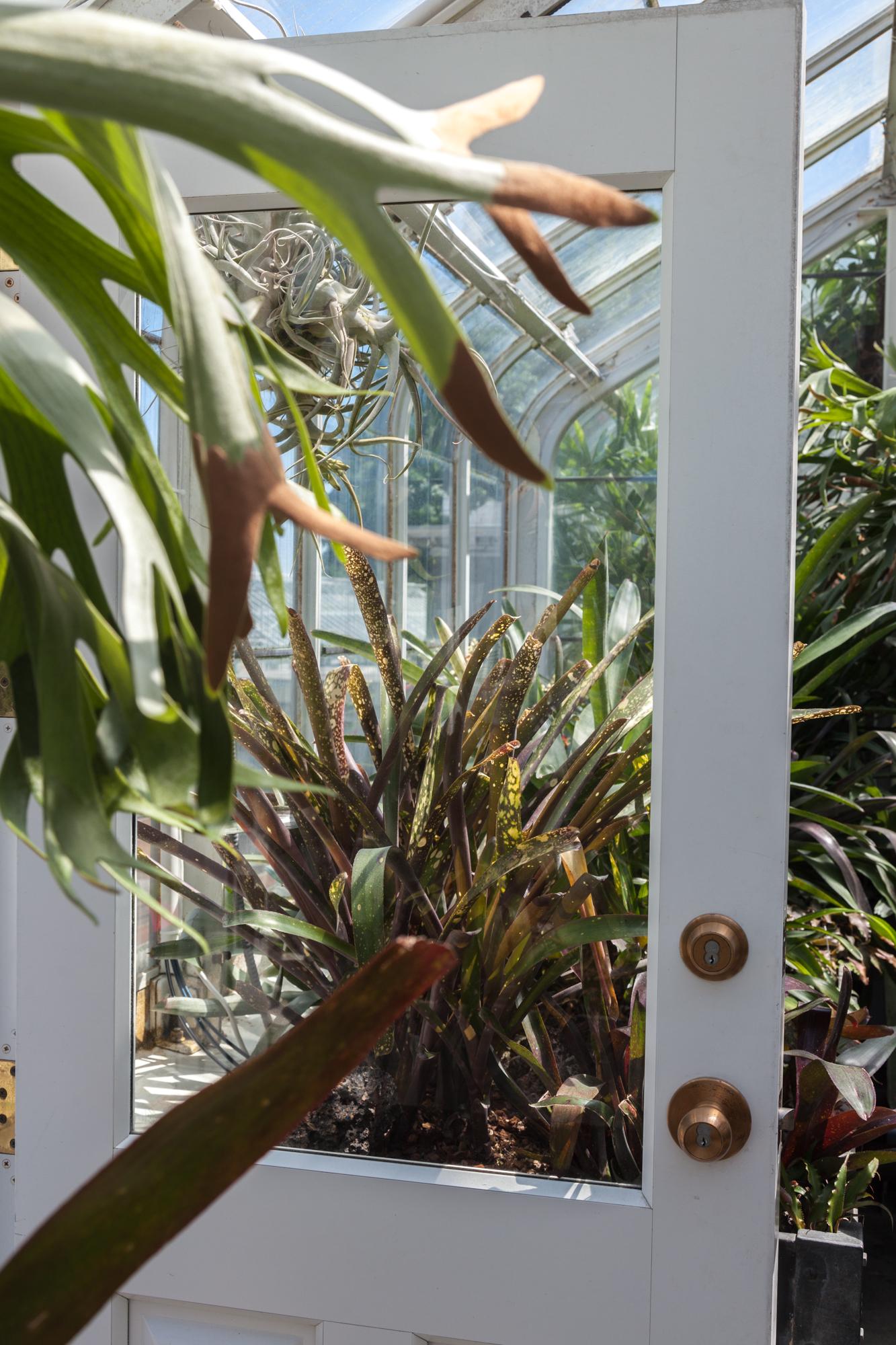 staghorn-fern-bromeliads.jpg